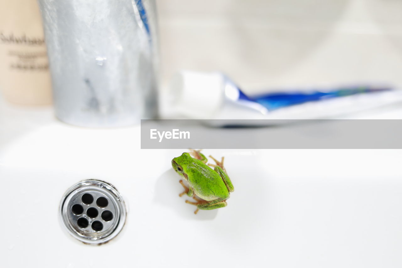 indoors, close-up, no people, focus on foreground, food and drink, leaf, plant part, still life, freshness, household equipment, nature, table, selective focus, high angle view, food, water, white color, green color, studio shot