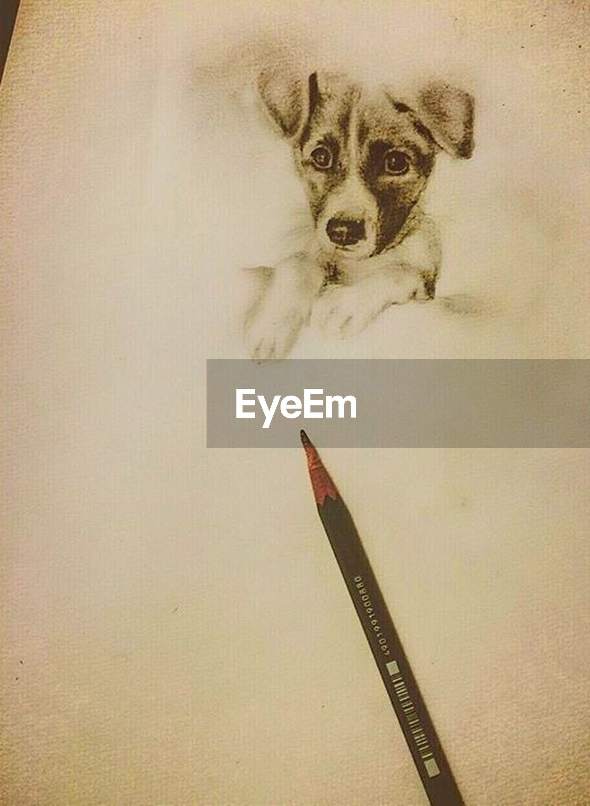 dog, pets, one animal, animal themes, mammal, domestic animals, no people, indoors, portrait, close-up, day
