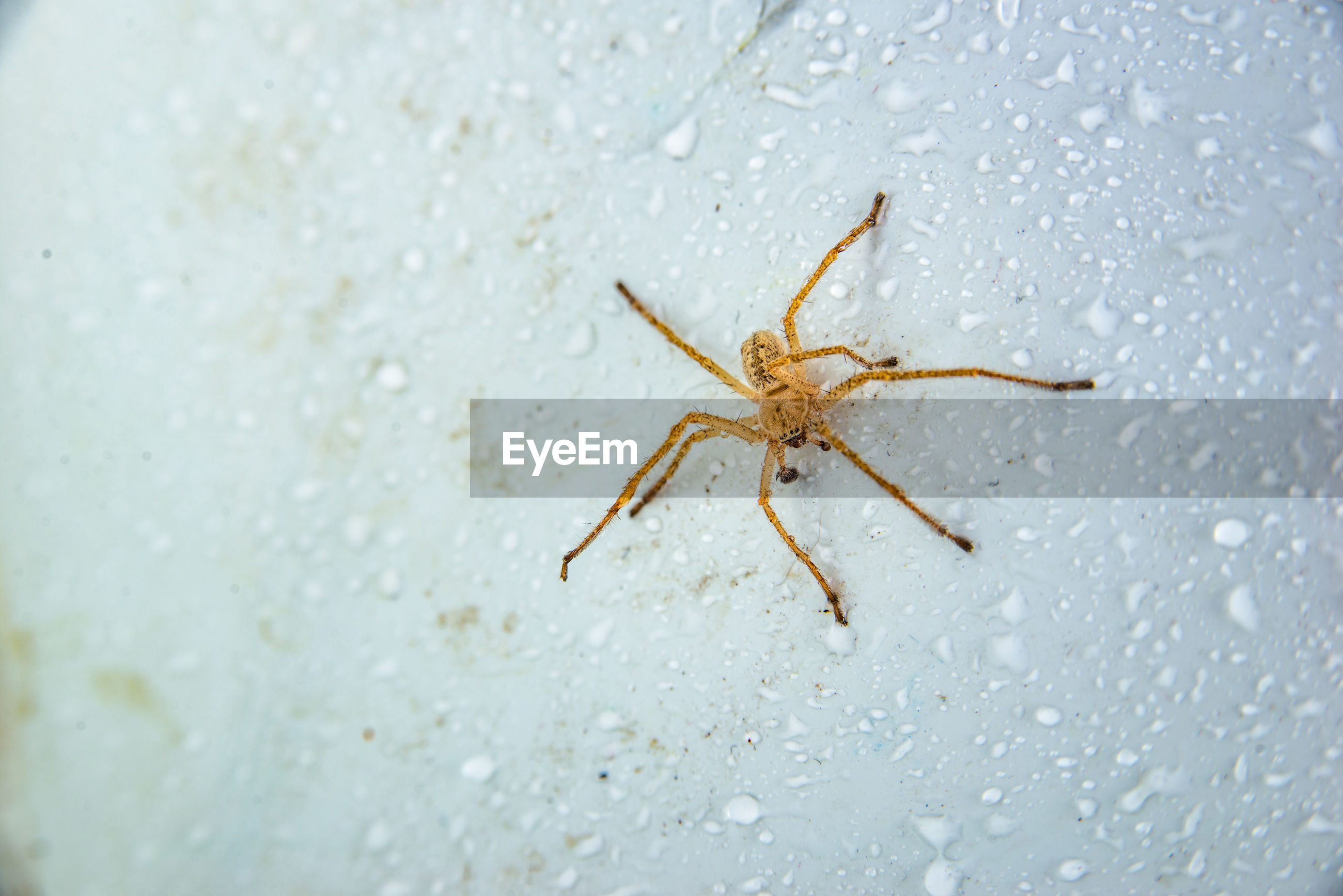 CLOSE-UP OF SPIDER ON THE GROUND