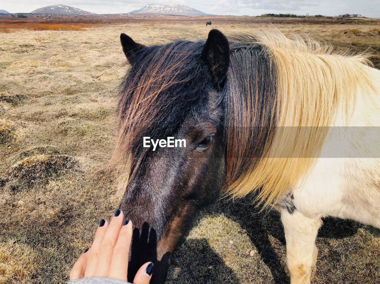 mammal, animal, animal themes, domestic animals, pets, domestic, vertebrate, one animal, horse, human hand, land, animal wildlife, one person, hand, human body part, livestock, field, day, nature, real people, outdoors, animal head, herbivorous, finger