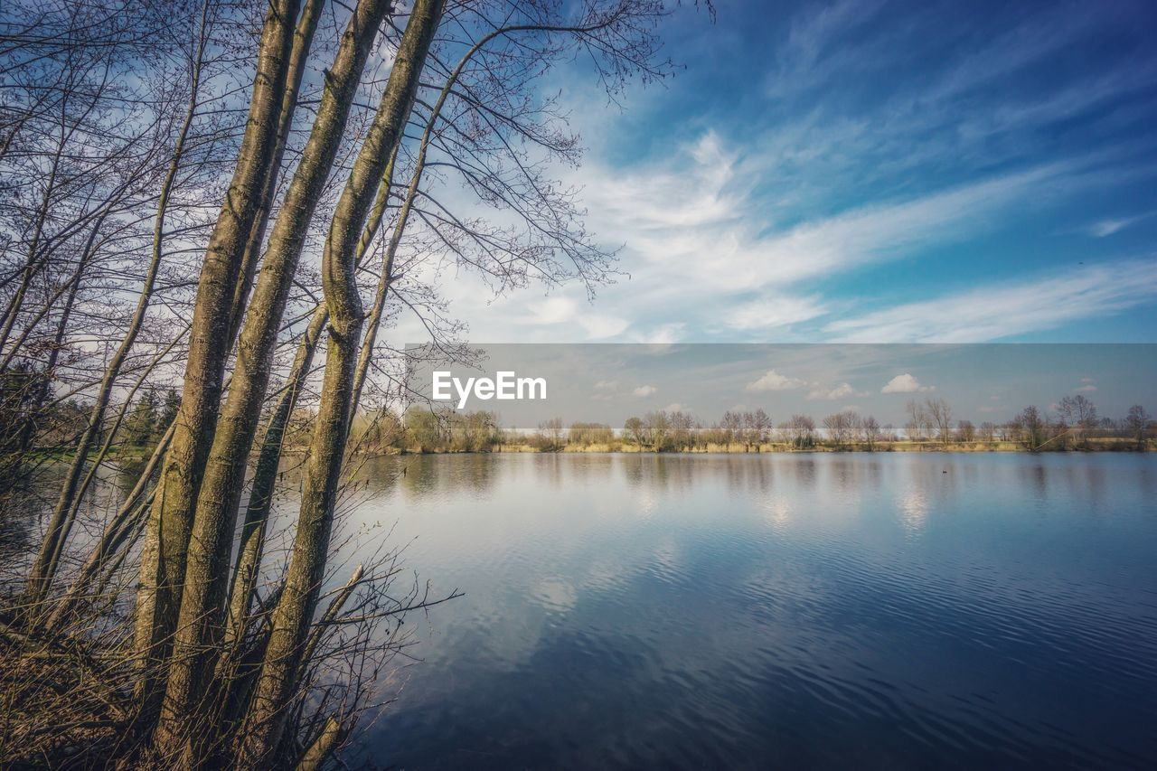 water, tree, tranquility, beauty in nature, tranquil scene, scenics - nature, lake, sky, reflection, plant, nature, cloud - sky, no people, bare tree, non-urban scene, day, idyllic, forest, standing water
