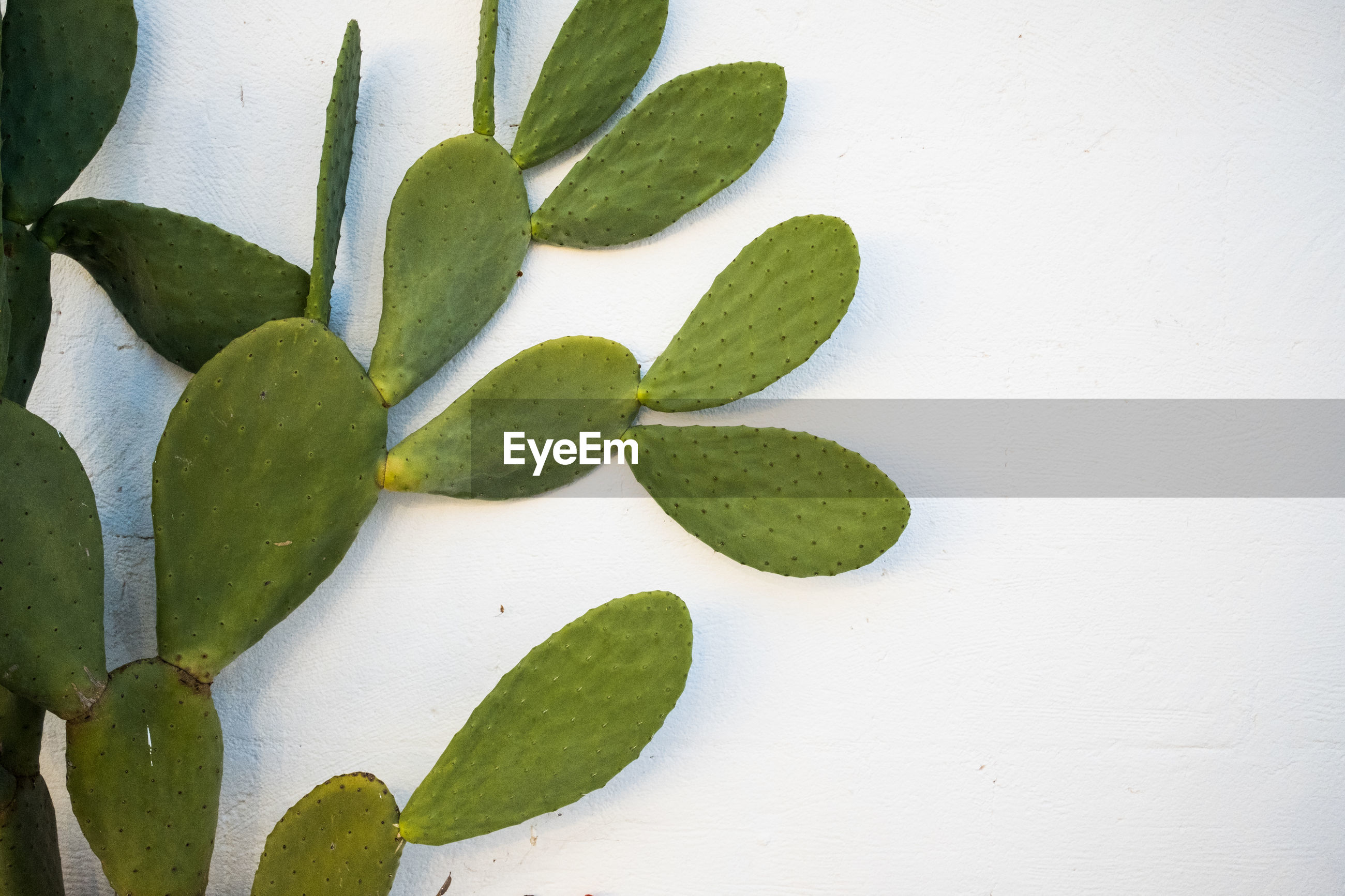 HIGH ANGLE VIEW OF SUCCULENT PLANT IN BACKGROUND