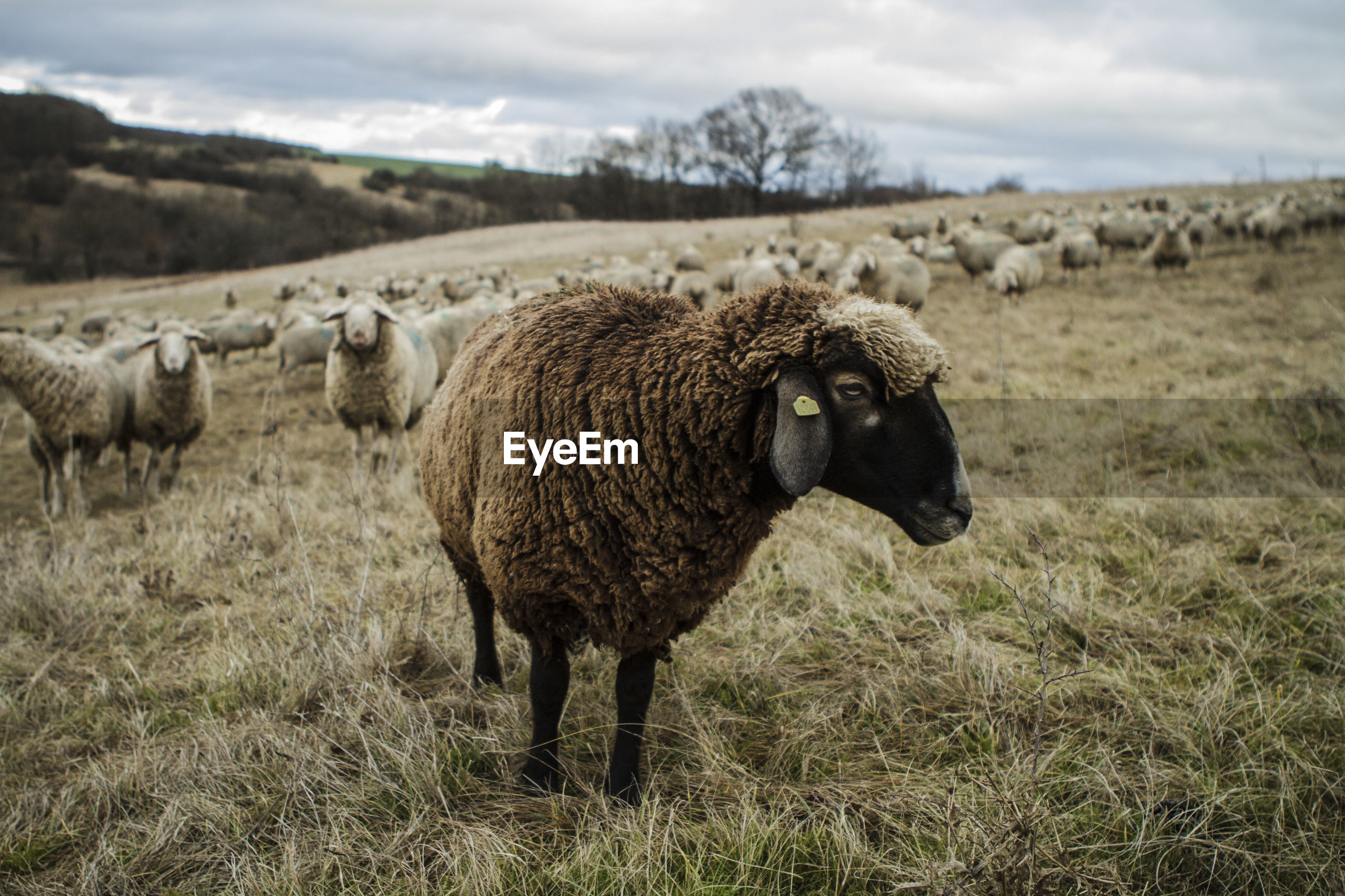 Sheep on field against sky