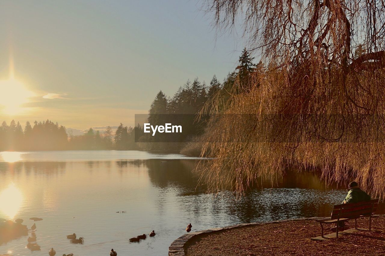 tree, water, reflection, nature, lake, scenics, beauty in nature, tranquility, tranquil scene, outdoors, sky, sunset, growth, no people, day, clear sky, swimming, animal themes, swan