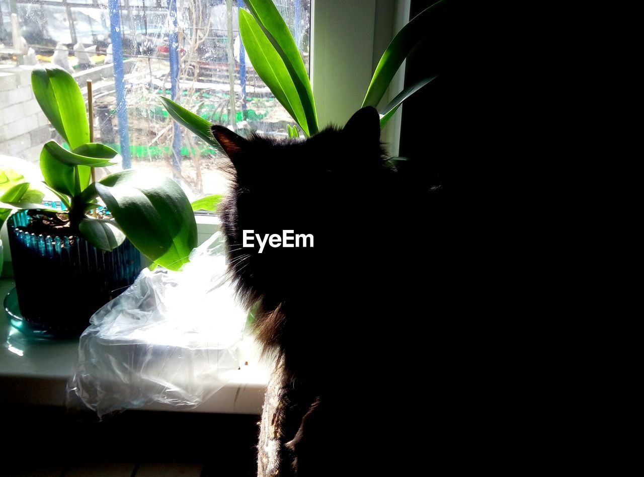 animal themes, one animal, domestic animals, pets, indoors, mammal, no people, home interior, domestic cat, day, plant, close-up, nature