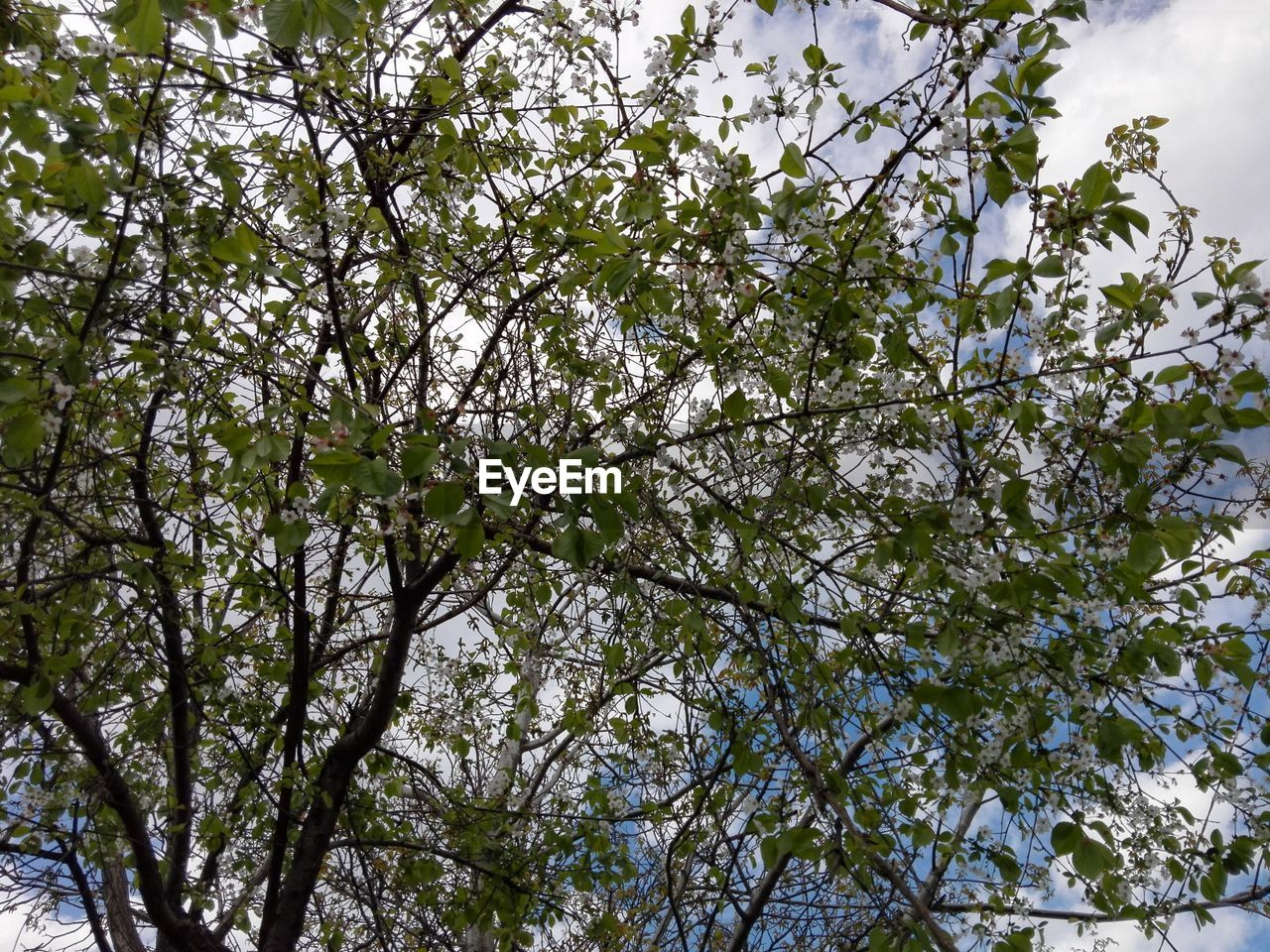 tree, nature, low angle view, flower, branch, growth, beauty in nature, freshness, blossom, fragility, springtime, no people, outdoors, day, backgrounds, sky