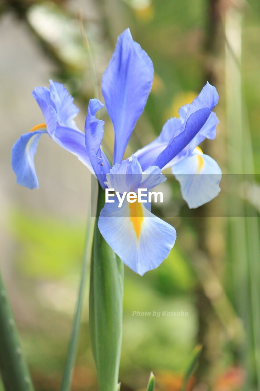 flower, beauty in nature, fragility, nature, petal, growth, freshness, plant, focus on foreground, day, outdoors, blooming, flower head, close-up, no people