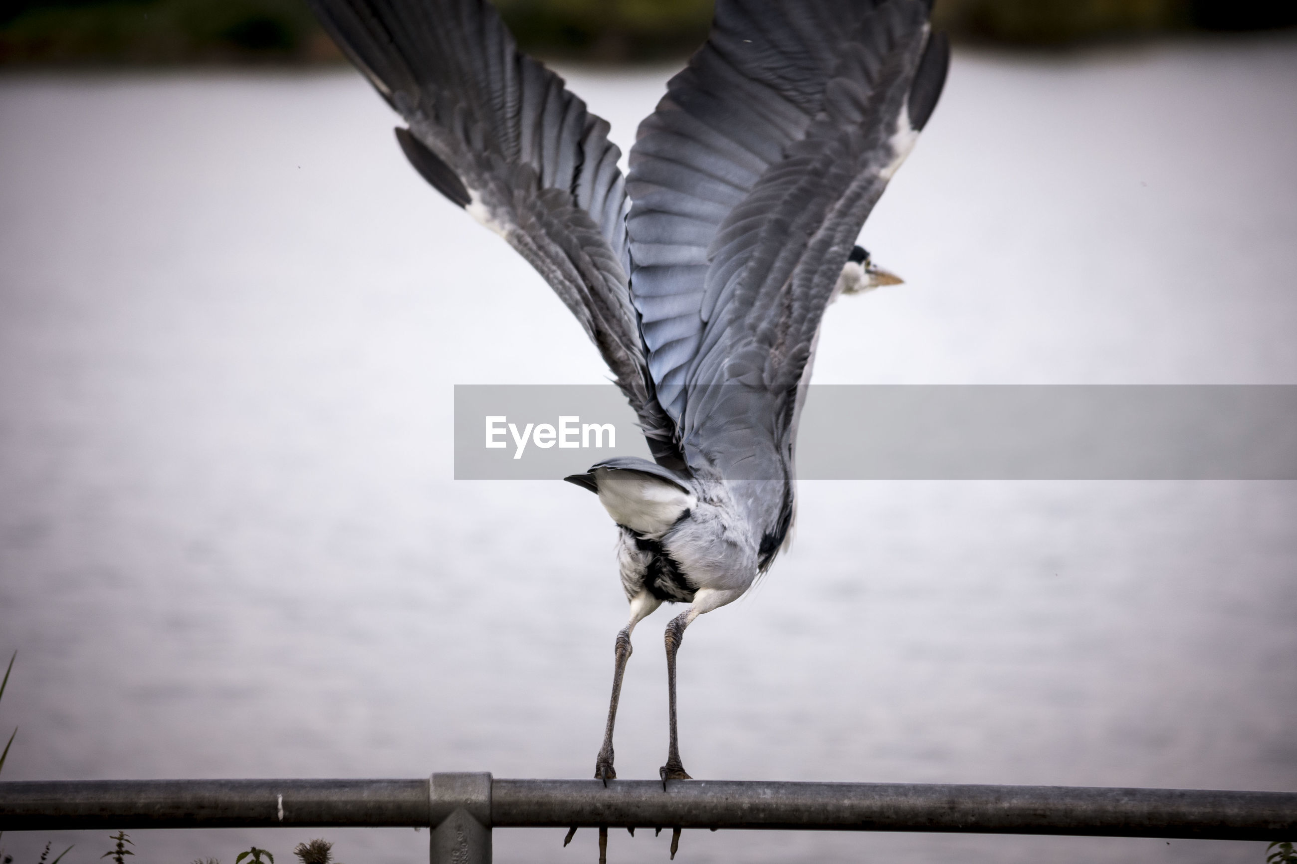 CLOSE-UP OF BIRD PERCHING ON POLE AGAINST SKY