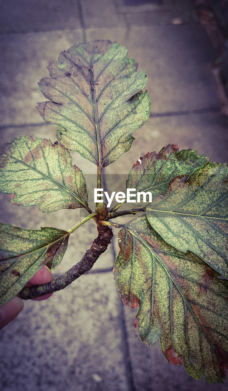 leaf, nature, close-up, focus on foreground, plant, outdoors, growth, green color, day, beauty in nature, no people, fragility, freshness