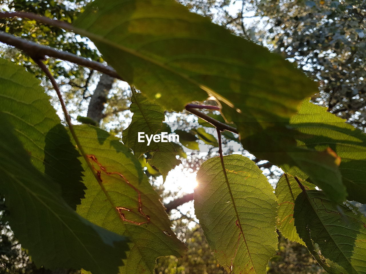 leaf, growth, nature, green color, day, low angle view, tree, beauty in nature, sunlight, no people, outdoors, branch, close-up, freshness, fragility, sky