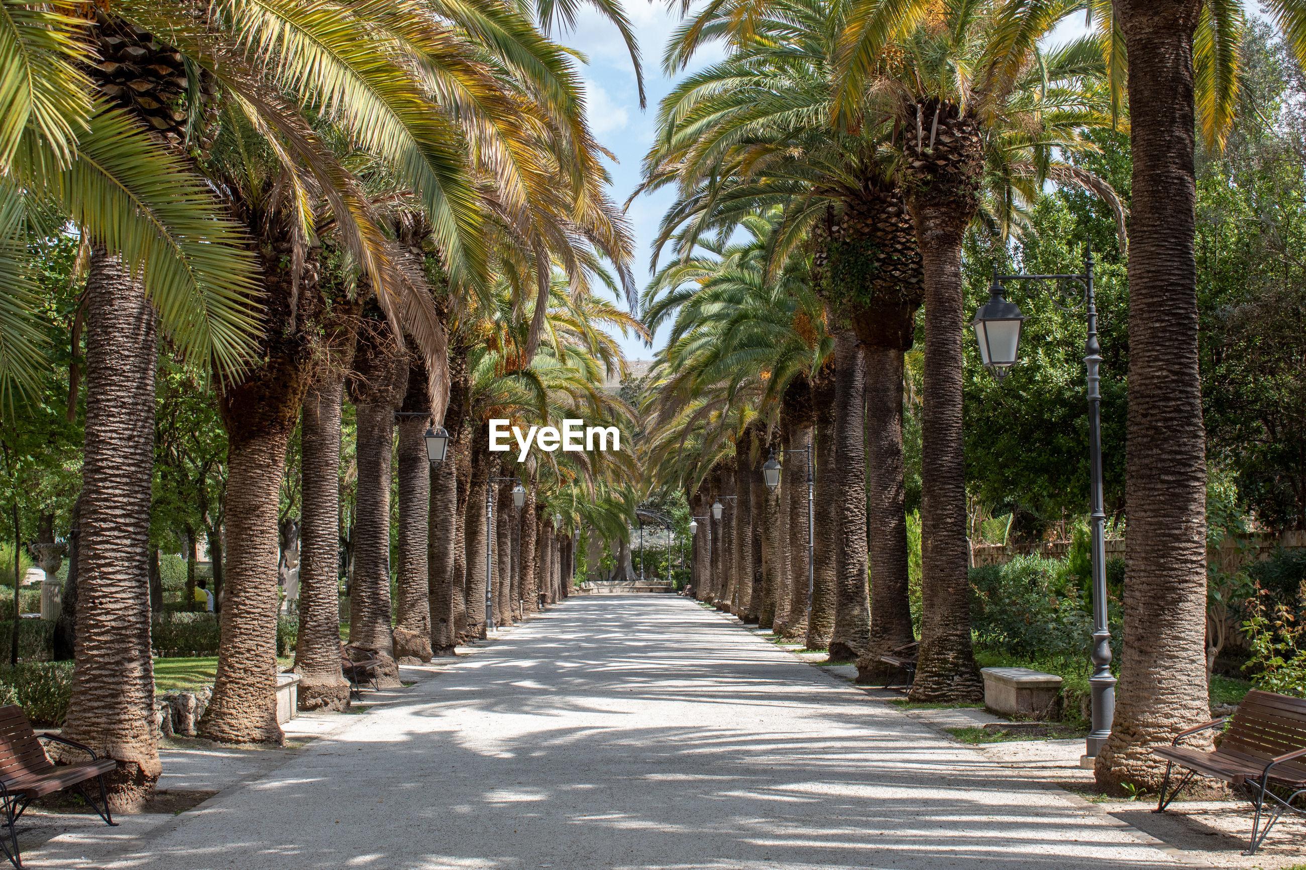 The main street of the villa in ragusa ibla