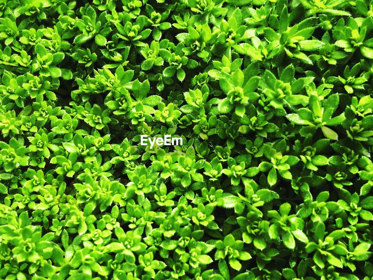 green color, growth, full frame, nature, plant, backgrounds, lush foliage, leaf, no people, day, outdoors, freshness, beauty in nature, grass, close-up