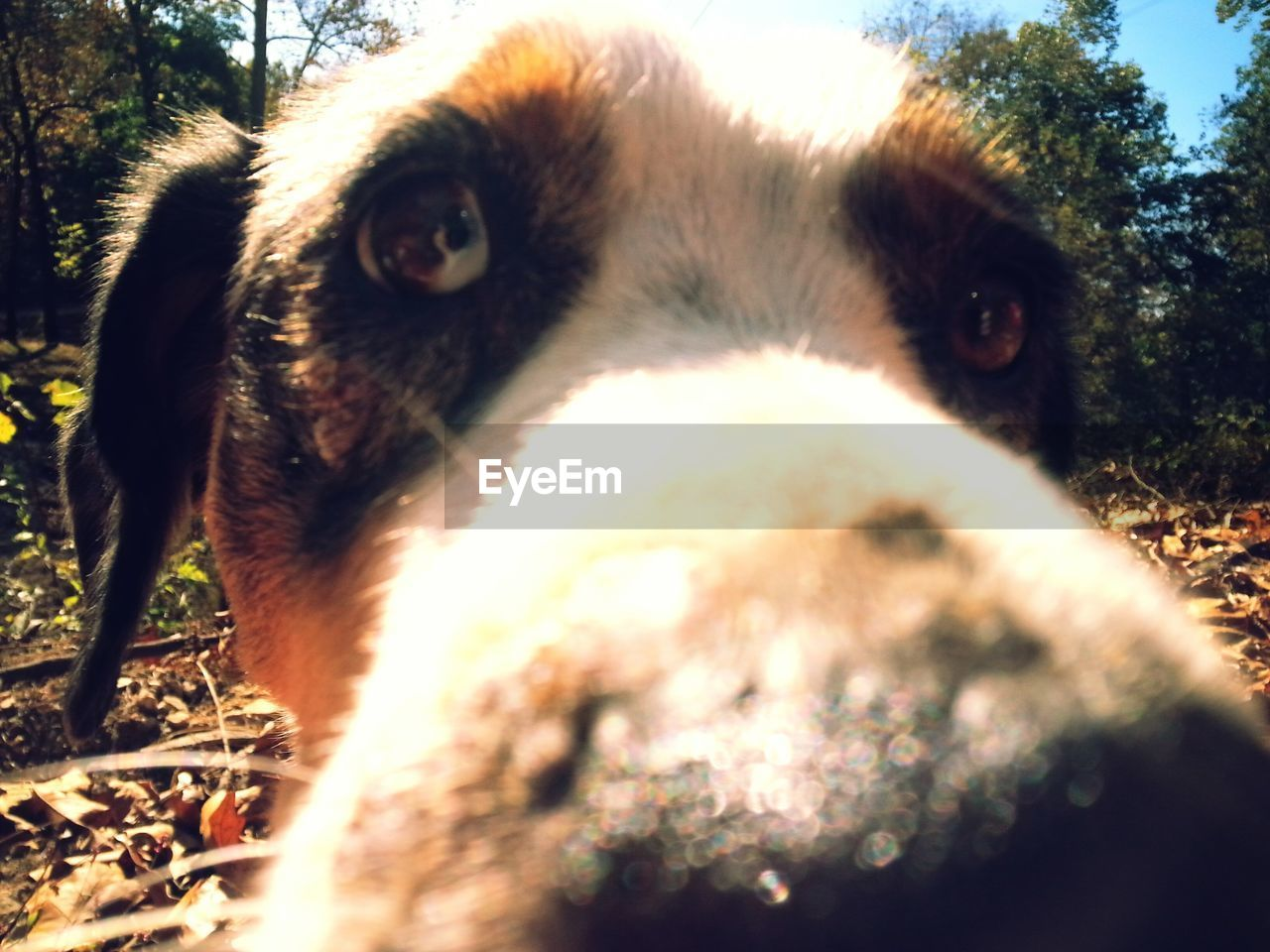 domestic animals, one animal, animal themes, dog, pets, mammal, close-up, day, looking at camera, portrait, animal head, no people, outdoors, nature, tree, grass