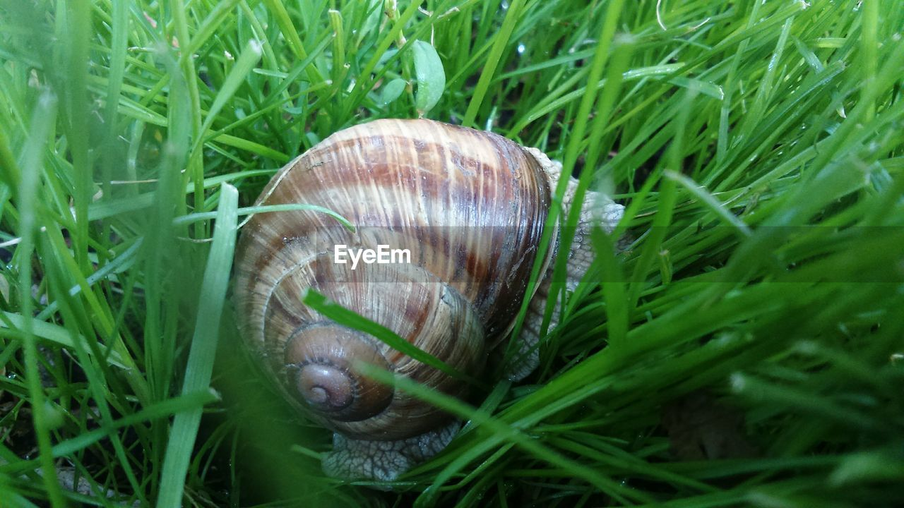snail, one animal, grass, animal themes, gastropod, wildlife, animals in the wild, nature, green color, close-up, outdoors, day, no people, fragility, slug