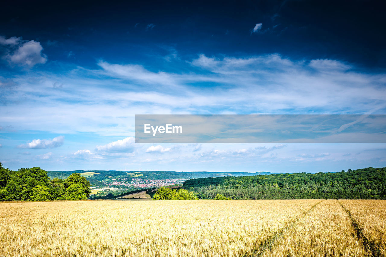landscape, sky, field, cloud - sky, scenics - nature, beauty in nature, agriculture, tranquil scene, environment, tranquility, rural scene, plant, land, growth, farm, crop, nature, day, no people, cereal plant, outdoors, plantation