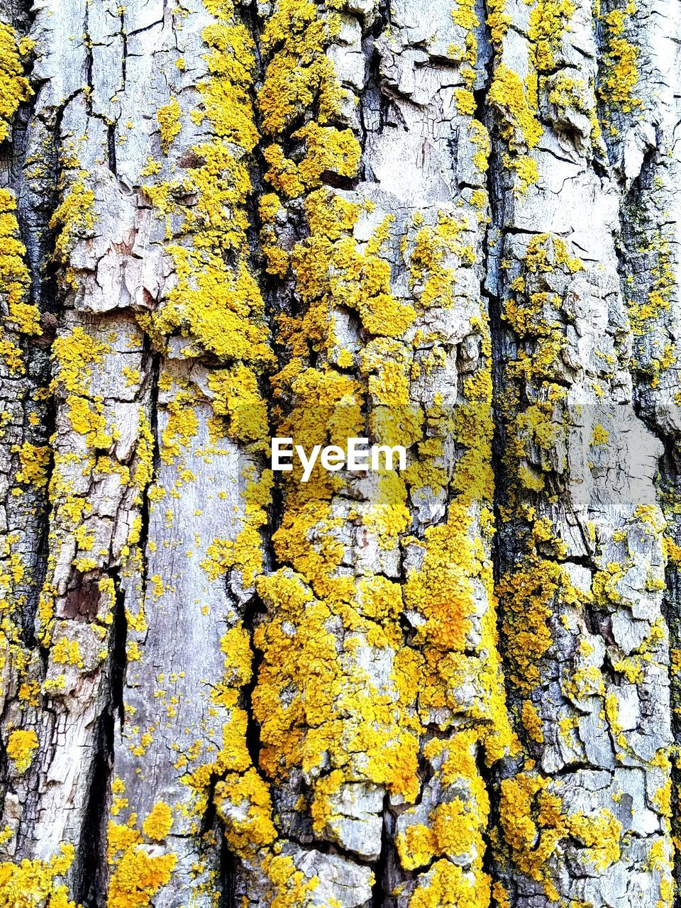 tree trunk, yellow, tree, textured, growth, full frame, lichen, backgrounds, bark, rough, day, outdoors, close-up, nature, no people, beauty in nature, plant, ivy