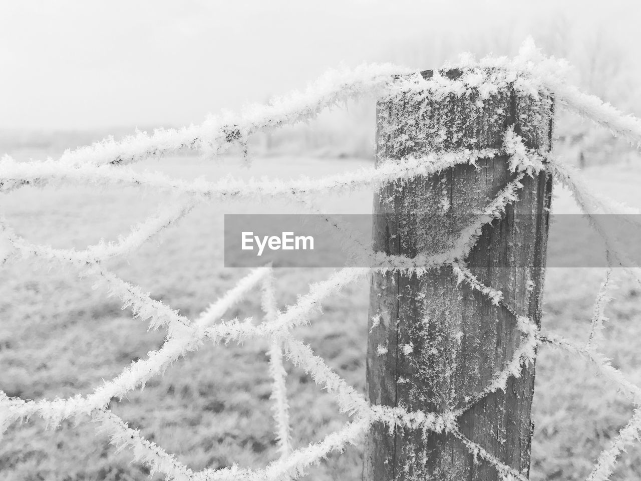 winter, cold temperature, snow, close-up, no people, nature, focus on foreground, day, outdoors, beauty in nature
