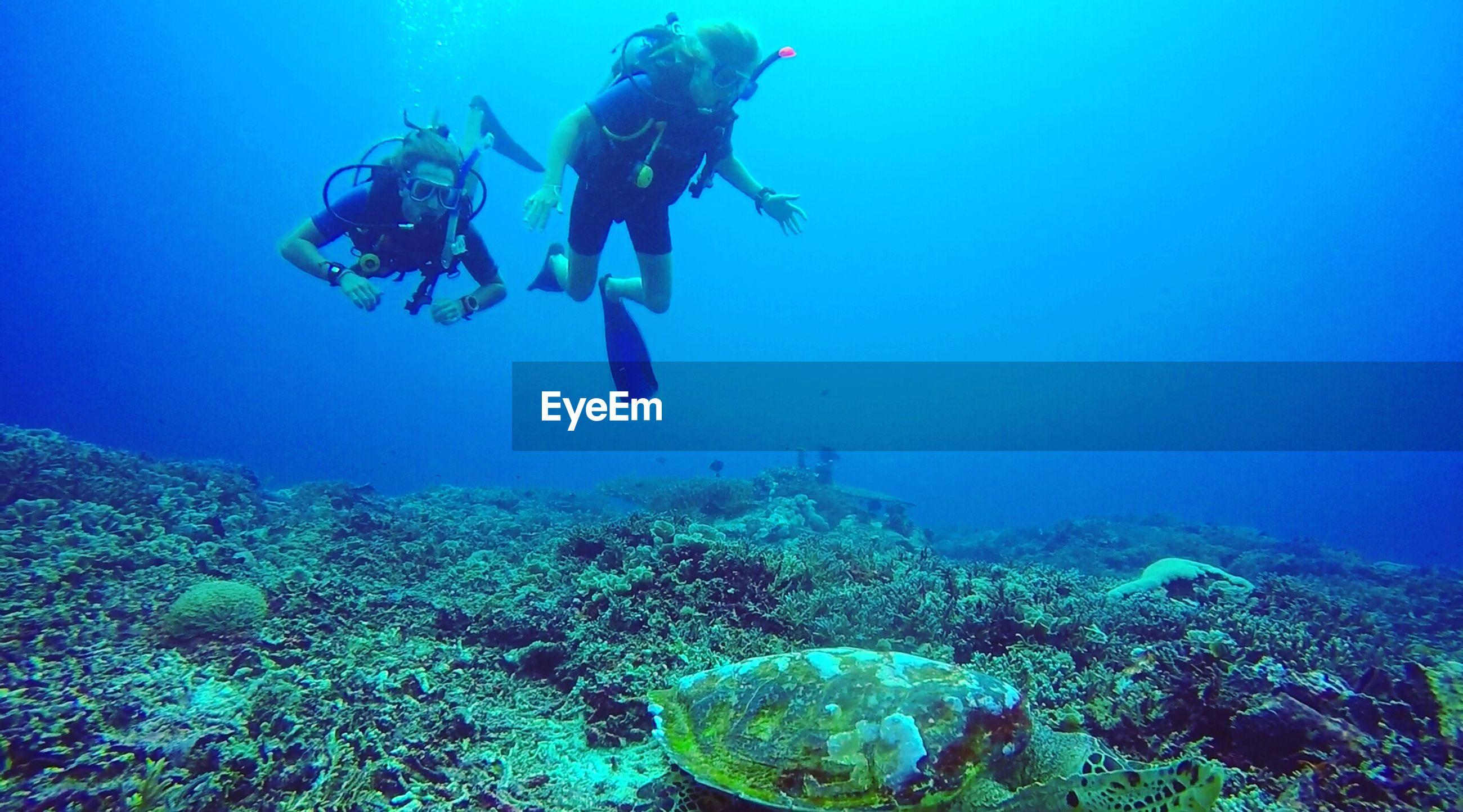 Men snorkeling in sea