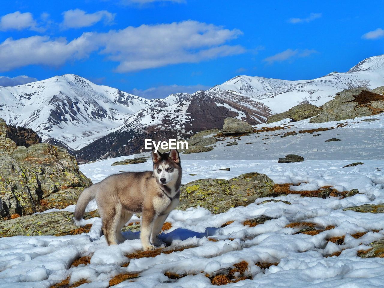 Dog standing on snow covered landscape