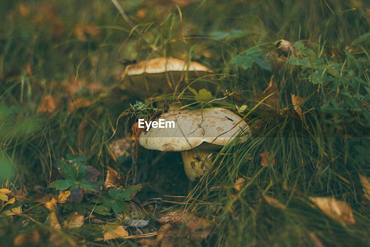 Close-Up Surface Level Of Mushrooms