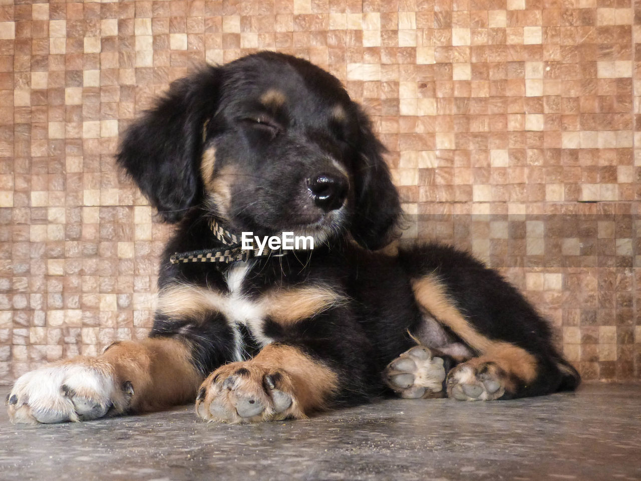 Puppy sleeping against wall