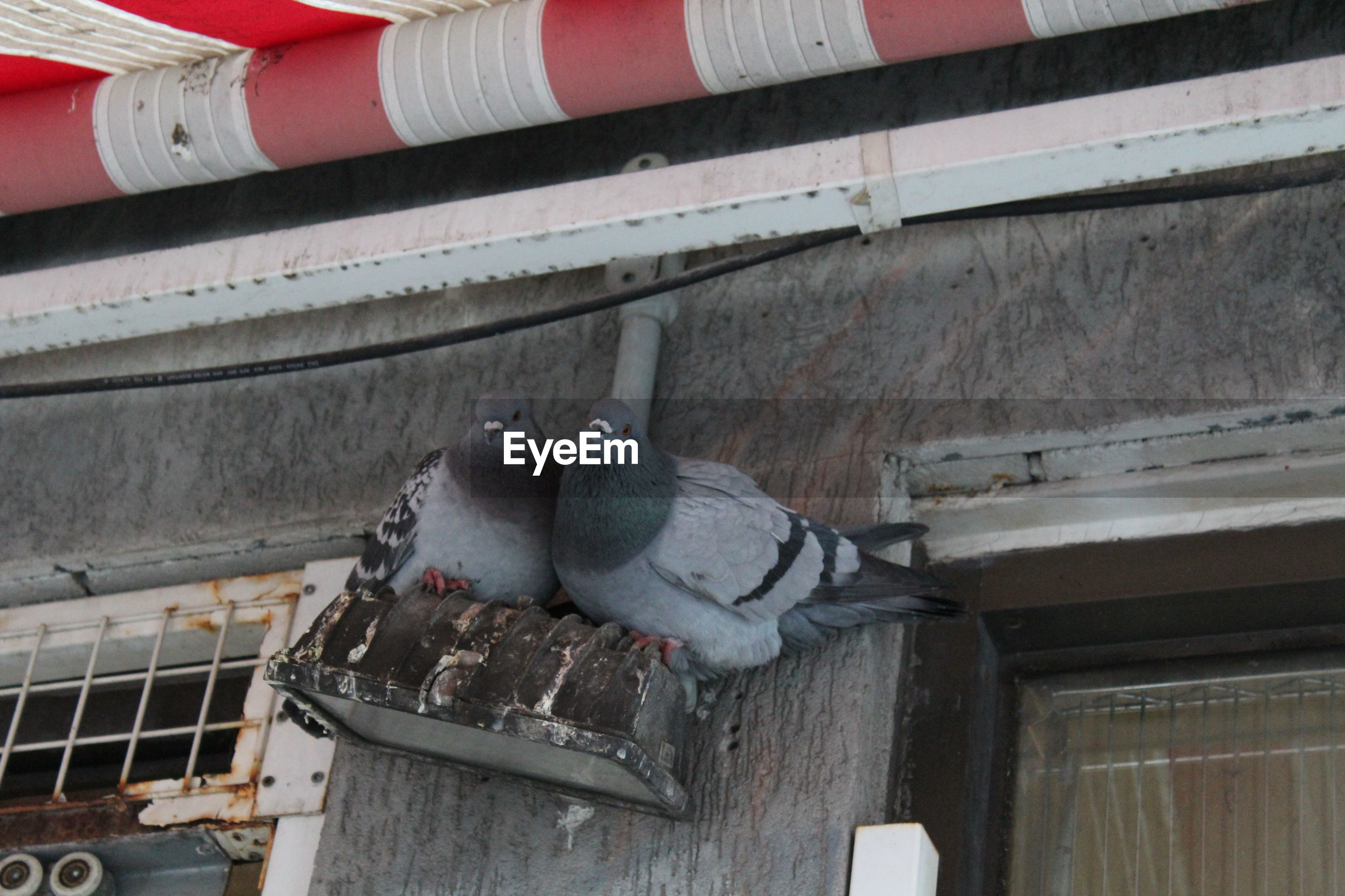 Low angle view of pigeons perching on lighting equipment by window