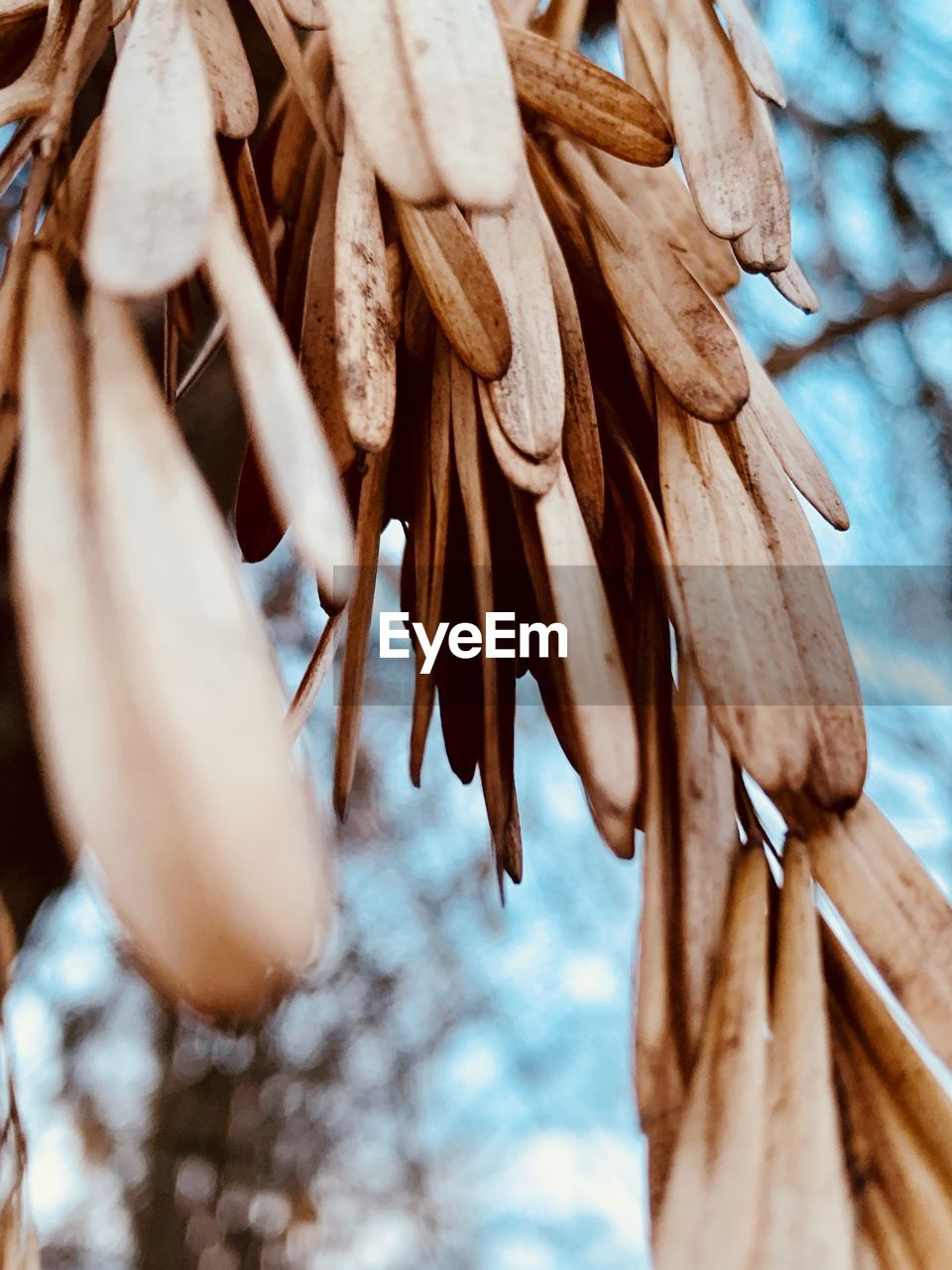 selective focus, close-up, plant, no people, brown, day, wood - material, nature, dry, low angle view, tree, outdoors, focus on foreground, growth, vulnerability, beauty in nature, food and drink, food, group of objects, fragility