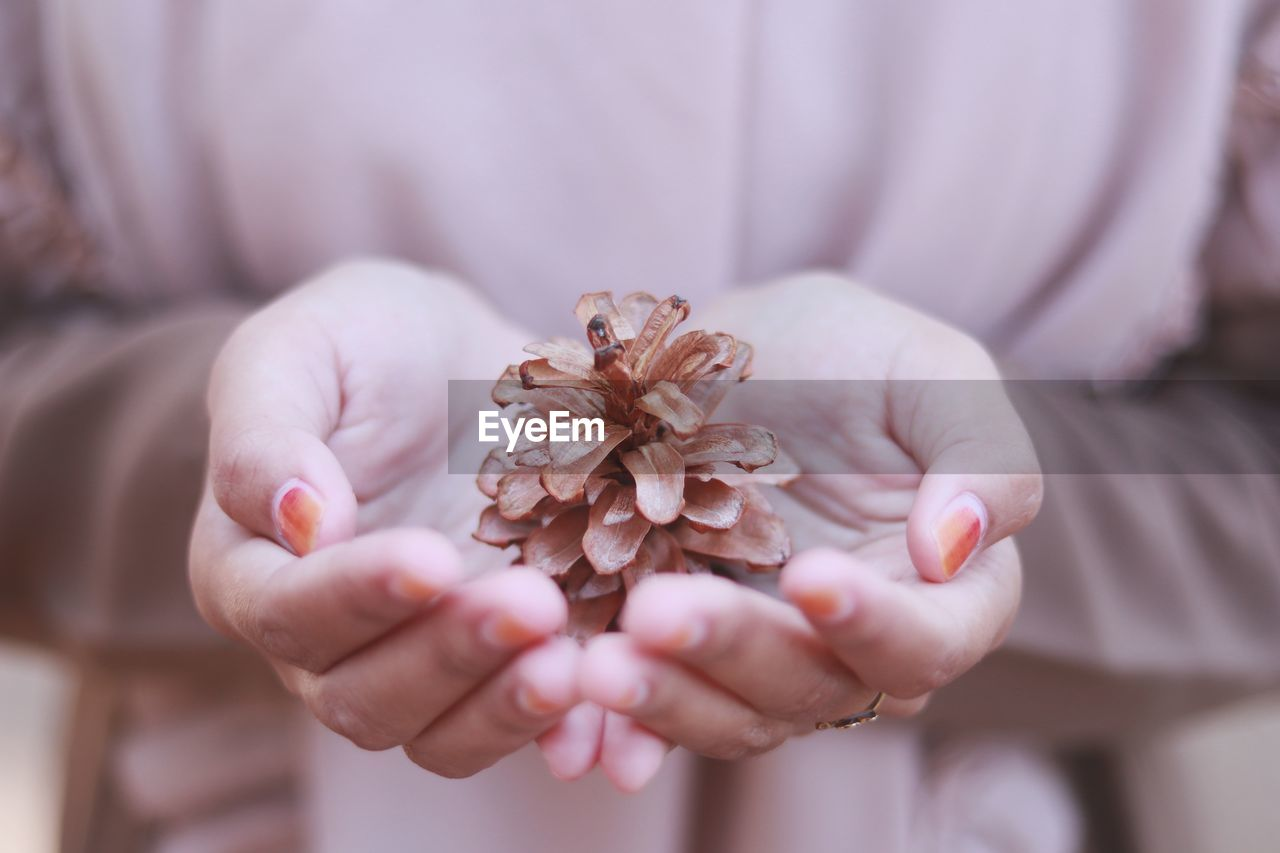 Close-up of woman holding pine cone