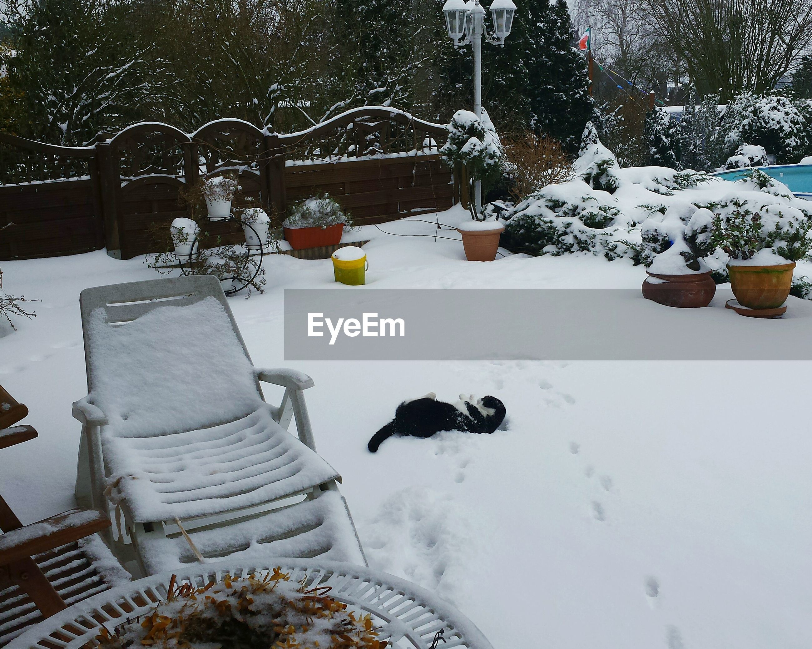 High angle view of cat on snow covered field