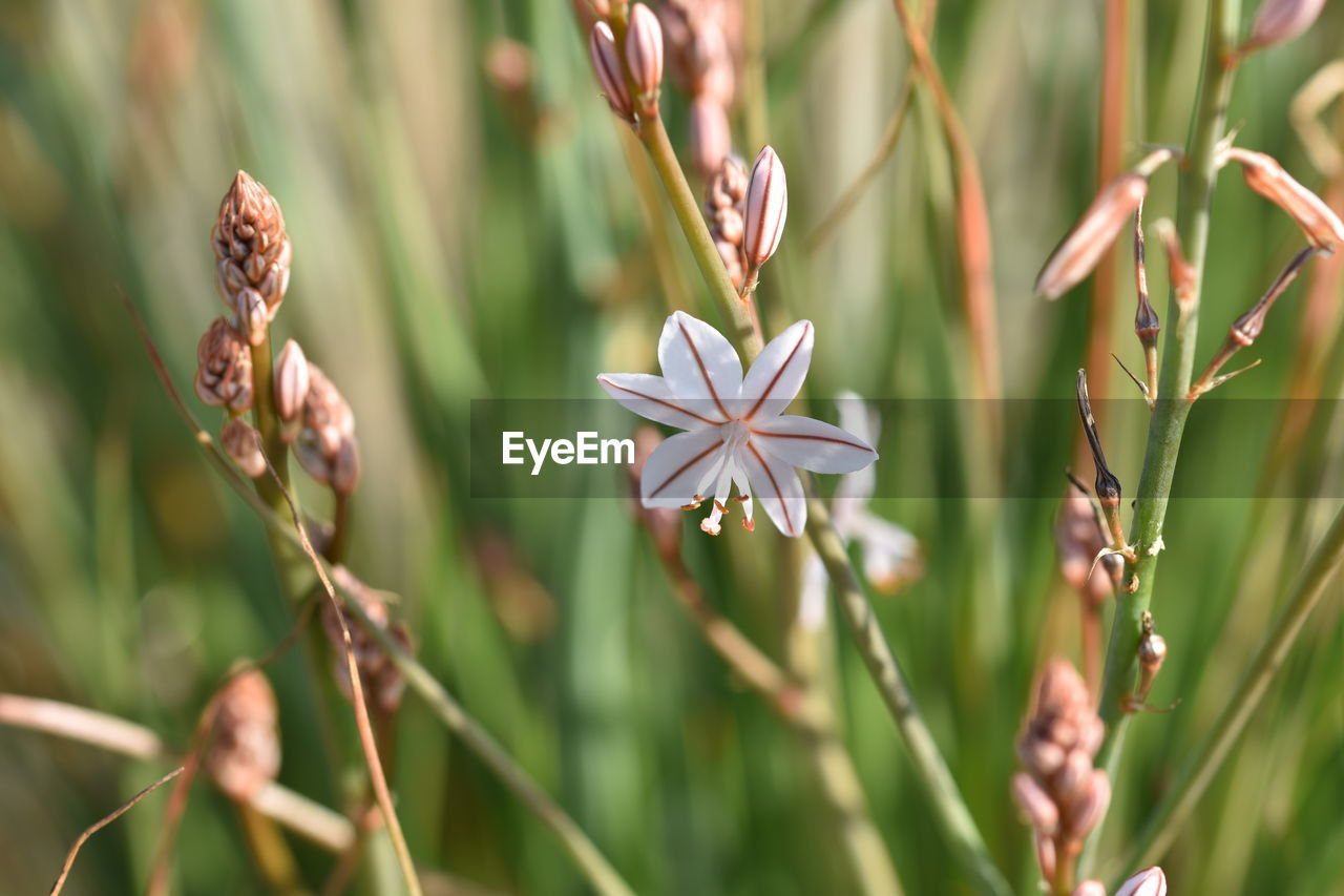 plant, growth, beauty in nature, flower, flowering plant, close-up, vulnerability, fragility, freshness, no people, day, nature, focus on foreground, petal, selective focus, plant stem, flower head, field, inflorescence, outdoors