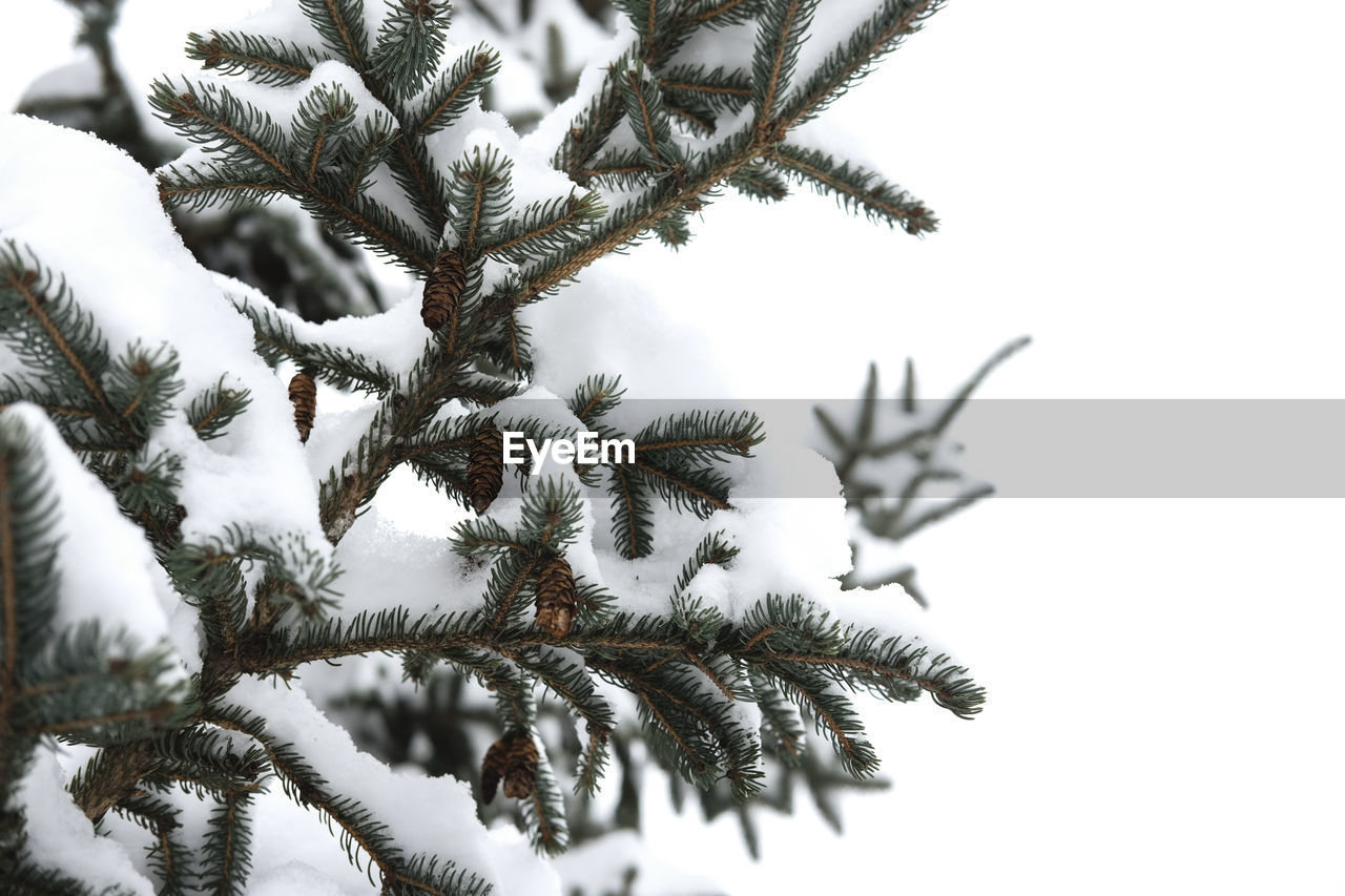 CLOSE-UP OF SNOW AGAINST SKY