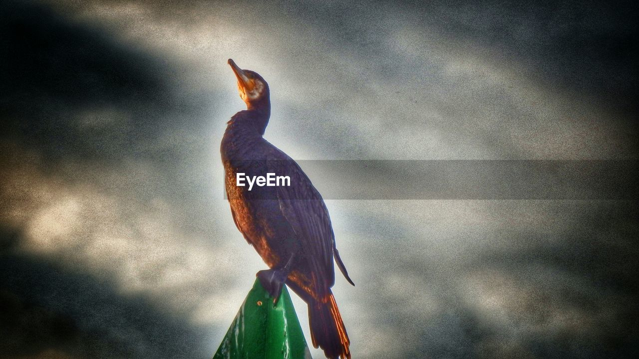 one animal, animal themes, sky, cloud - sky, bird, animals in the wild, perching, low angle view, animal wildlife, no people, nature, outdoors, day, beauty in nature, close-up