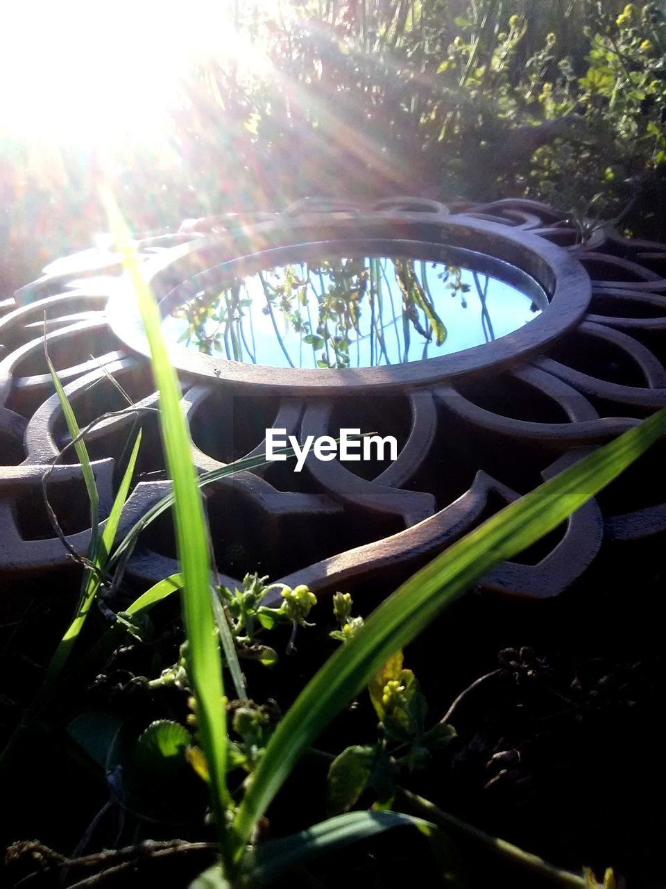 plant, growth, nature, day, sunlight, close-up, no people, selective focus, outdoors, beauty in nature, grass, land, green color, tree, plant part, leaf, sky, flower, fragility, lens flare, blade of grass