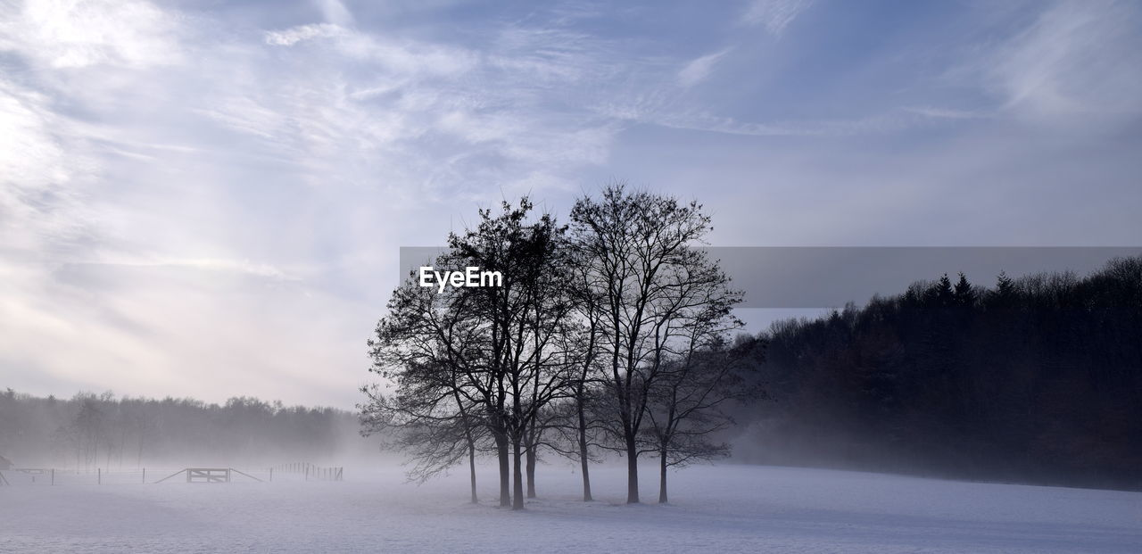 tree, sky, winter, beauty in nature, plant, cold temperature, tranquility, cloud - sky, snow, tranquil scene, scenics - nature, no people, bare tree, environment, non-urban scene, nature, field, land, landscape