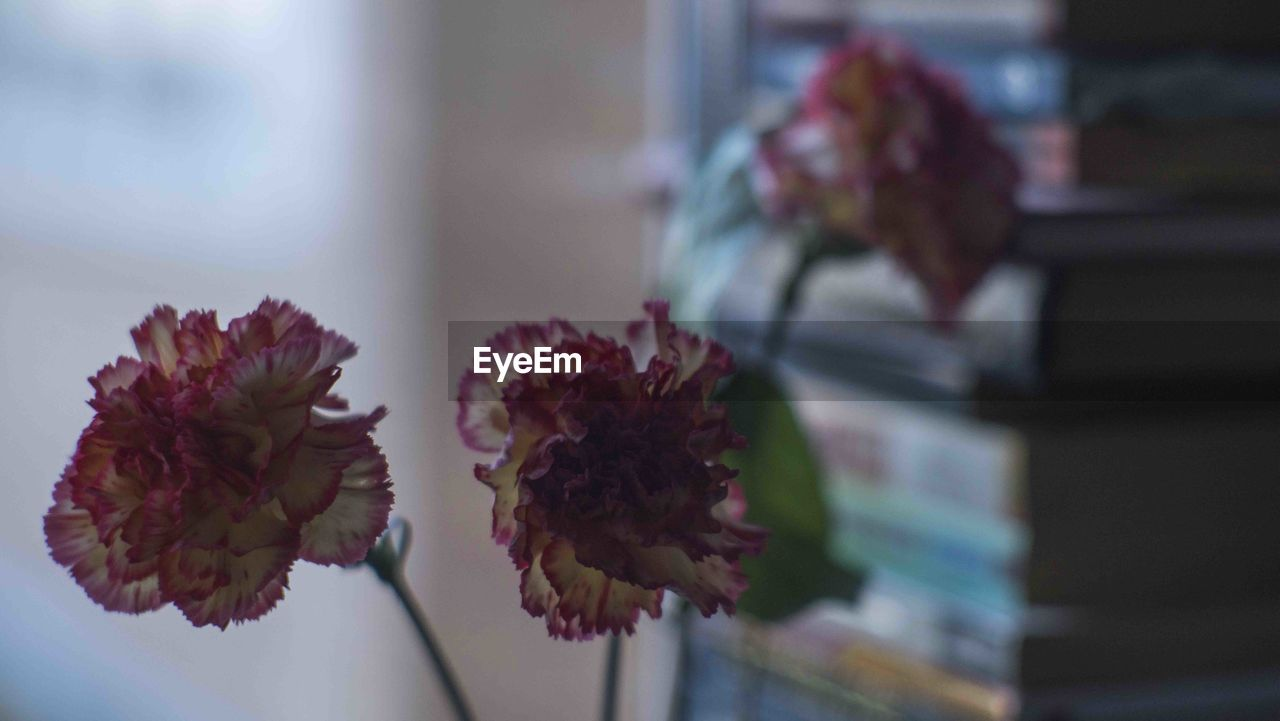 flowering plant, flower, fragility, vulnerability, beauty in nature, plant, freshness, flower head, petal, close-up, inflorescence, nature, indoors, vase, no people, flower arrangement, arrangement, focus on foreground, bouquet, growth, wilted plant