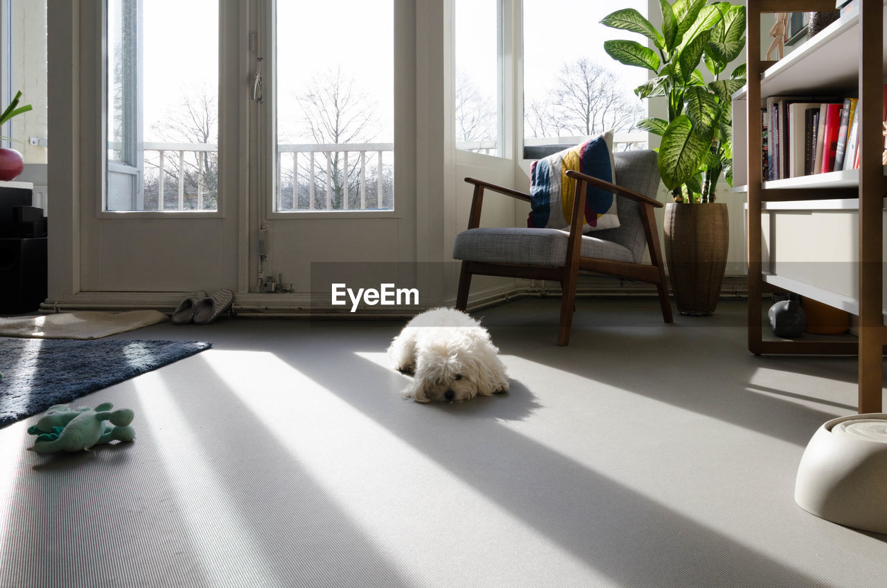 one animal, domestic, mammal, pets, animal themes, animal, domestic animals, window, indoors, vertebrate, home interior, no people, canine, dog, day, sunlight, cat, feline, nature, relaxation, shih tzu