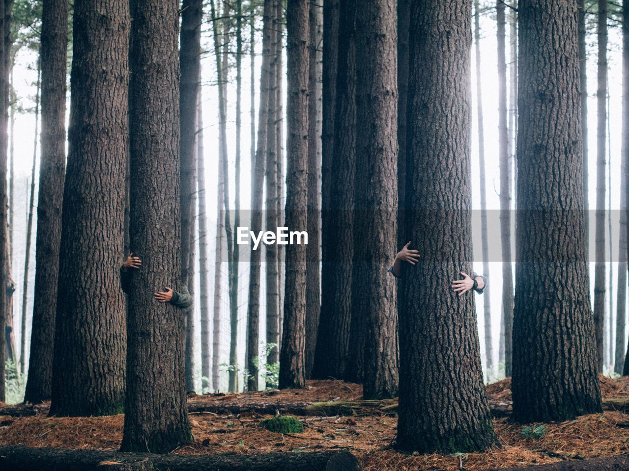 People hugging tree in forest