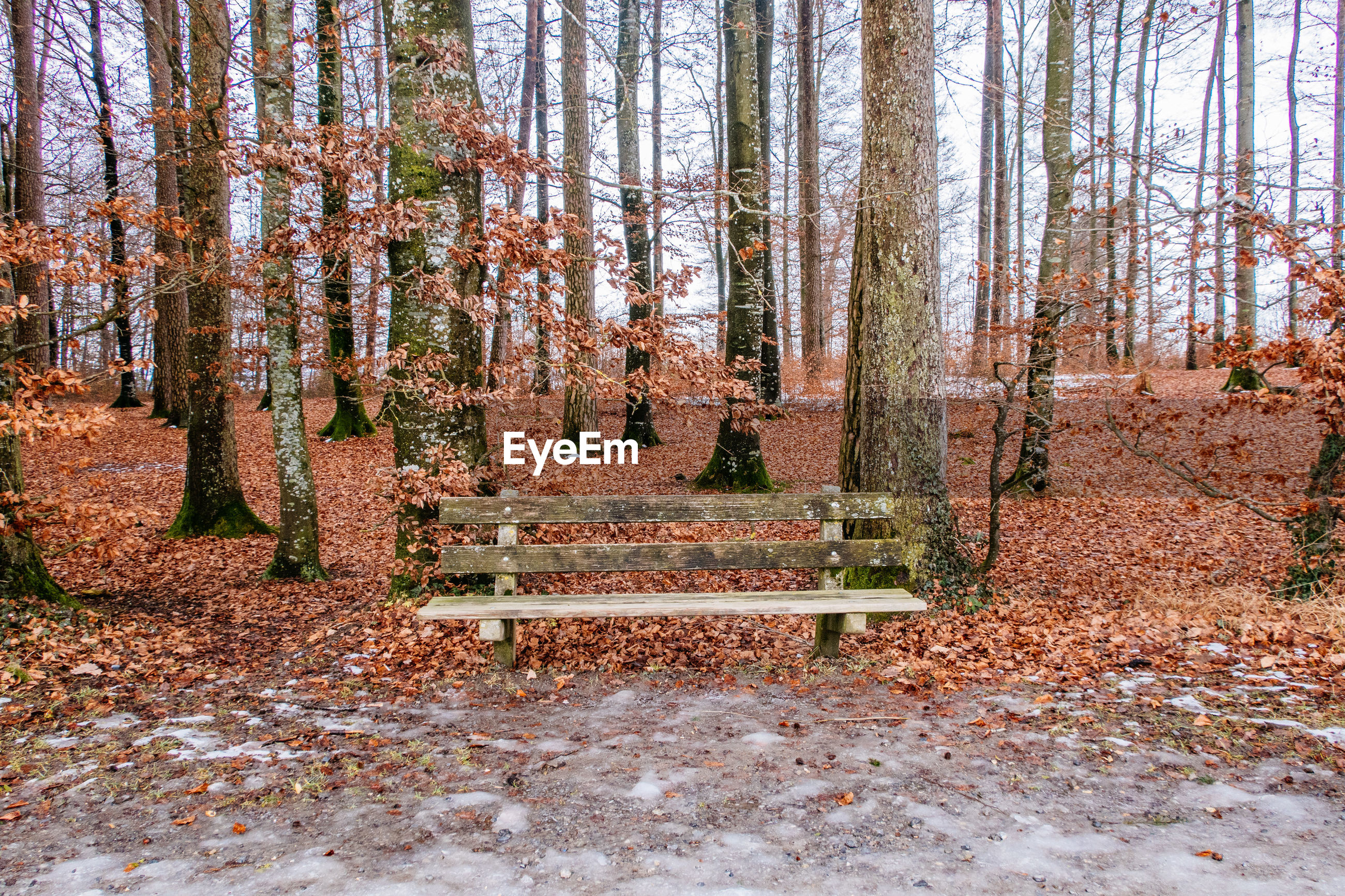Empty bench against trees at park during winter
