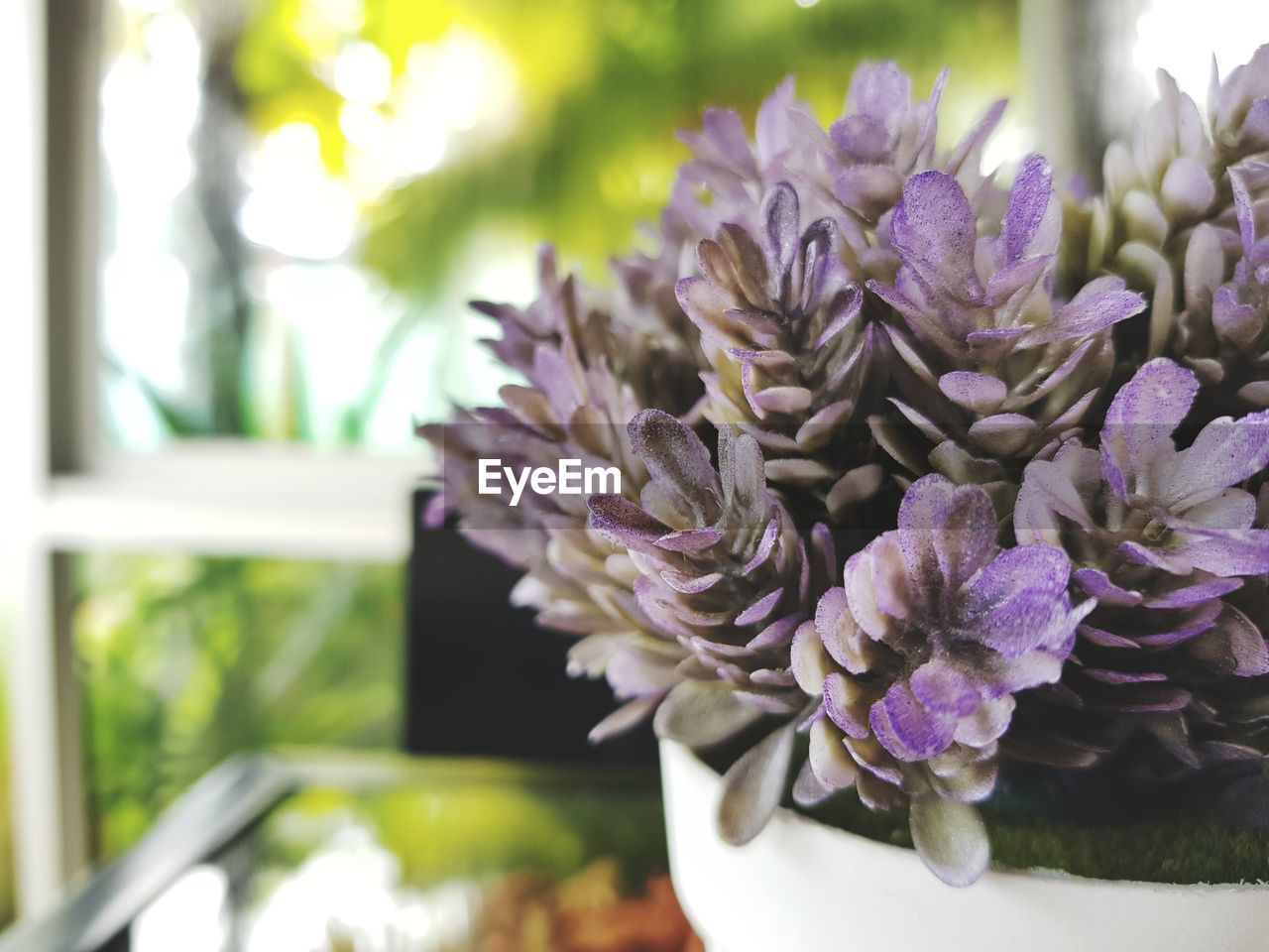 flower, plant, flowering plant, vulnerability, freshness, beauty in nature, fragility, focus on foreground, close-up, purple, nature, petal, no people, flower head, inflorescence, day, growth, selective focus, outdoors, botany, bunch of flowers, flower arrangement, bouquet, lilac