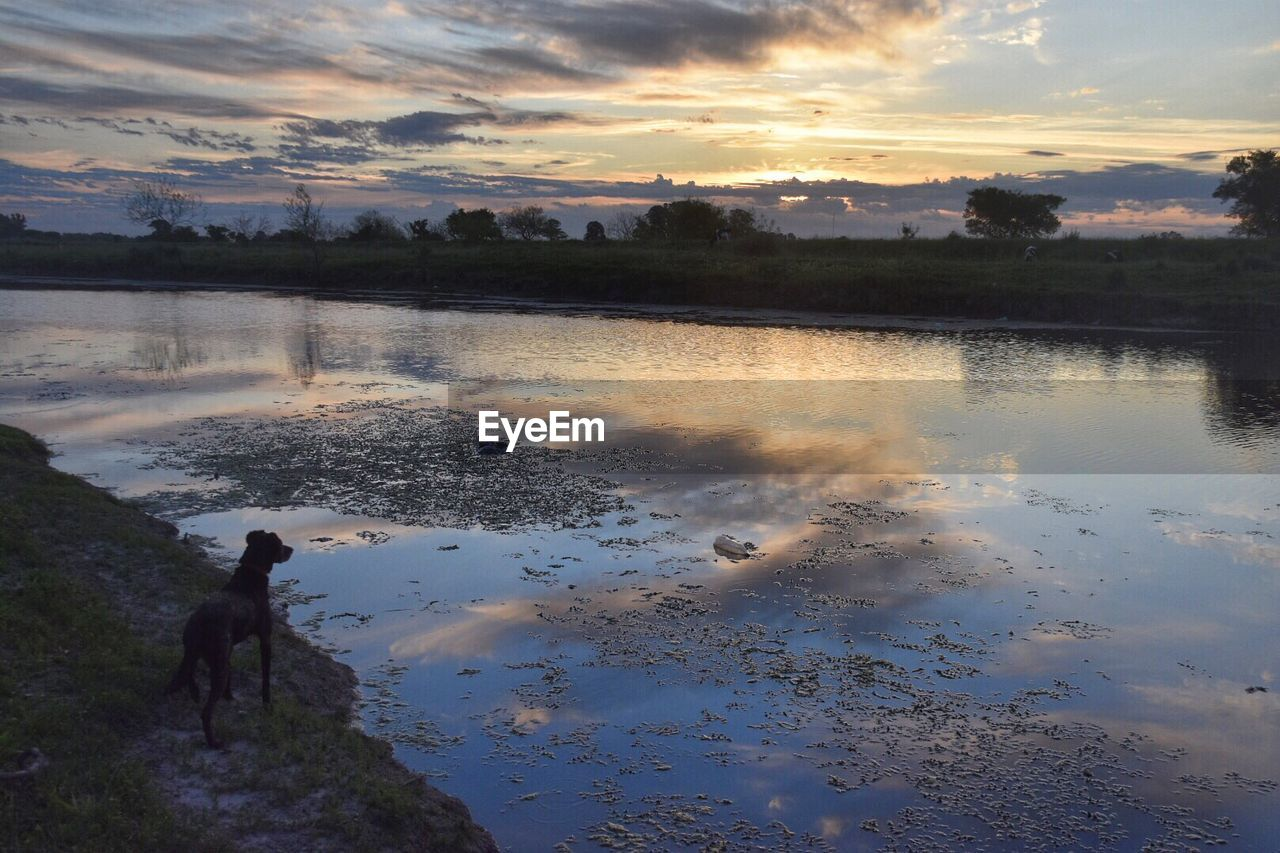 High angle view of dog at riverbank during sunset