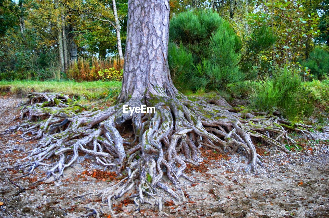 tree, forest, nature, tree trunk, tranquility, woodland, no people, outdoors, day, growth, landscape, beauty in nature, branch, grass