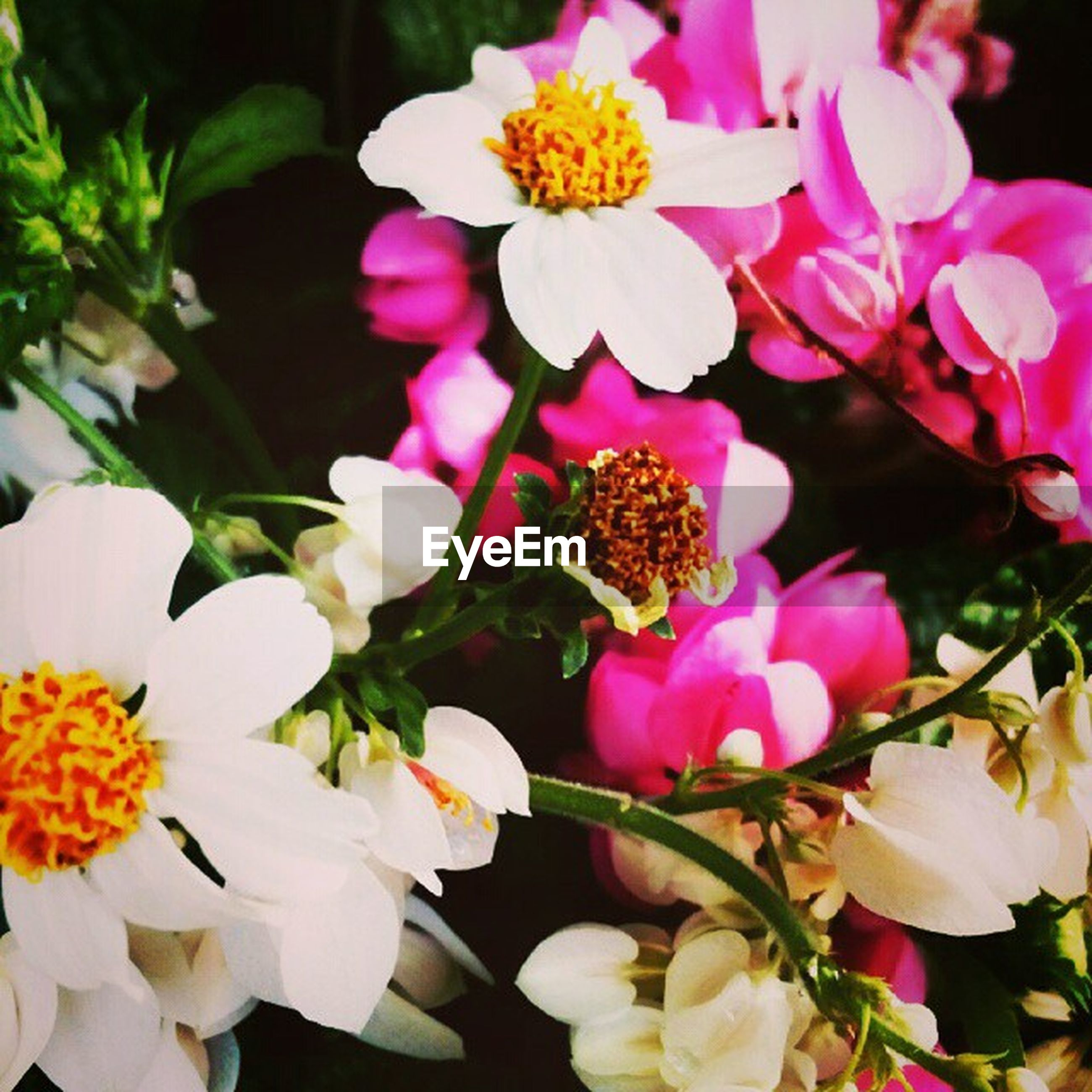 flower, petal, freshness, fragility, flower head, beauty in nature, growth, blooming, nature, close-up, pollen, pink color, focus on foreground, plant, blossom, in bloom, stamen, park - man made space, yellow, outdoors