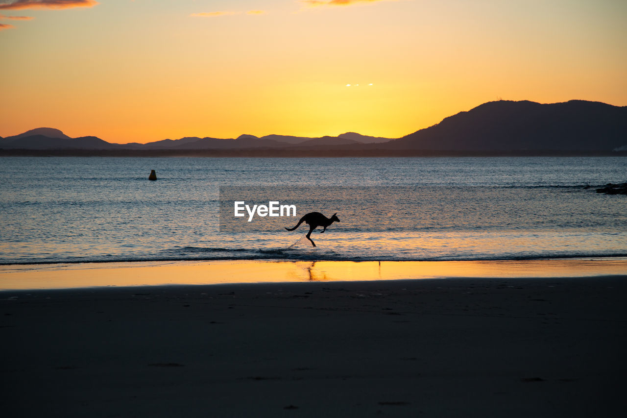 sunset, water, sky, silhouette, sea, beach, land, beauty in nature, one animal, scenics - nature, animal, vertebrate, animal themes, orange color, tranquil scene, tranquility, animals in the wild, mountain, nature, outdoors