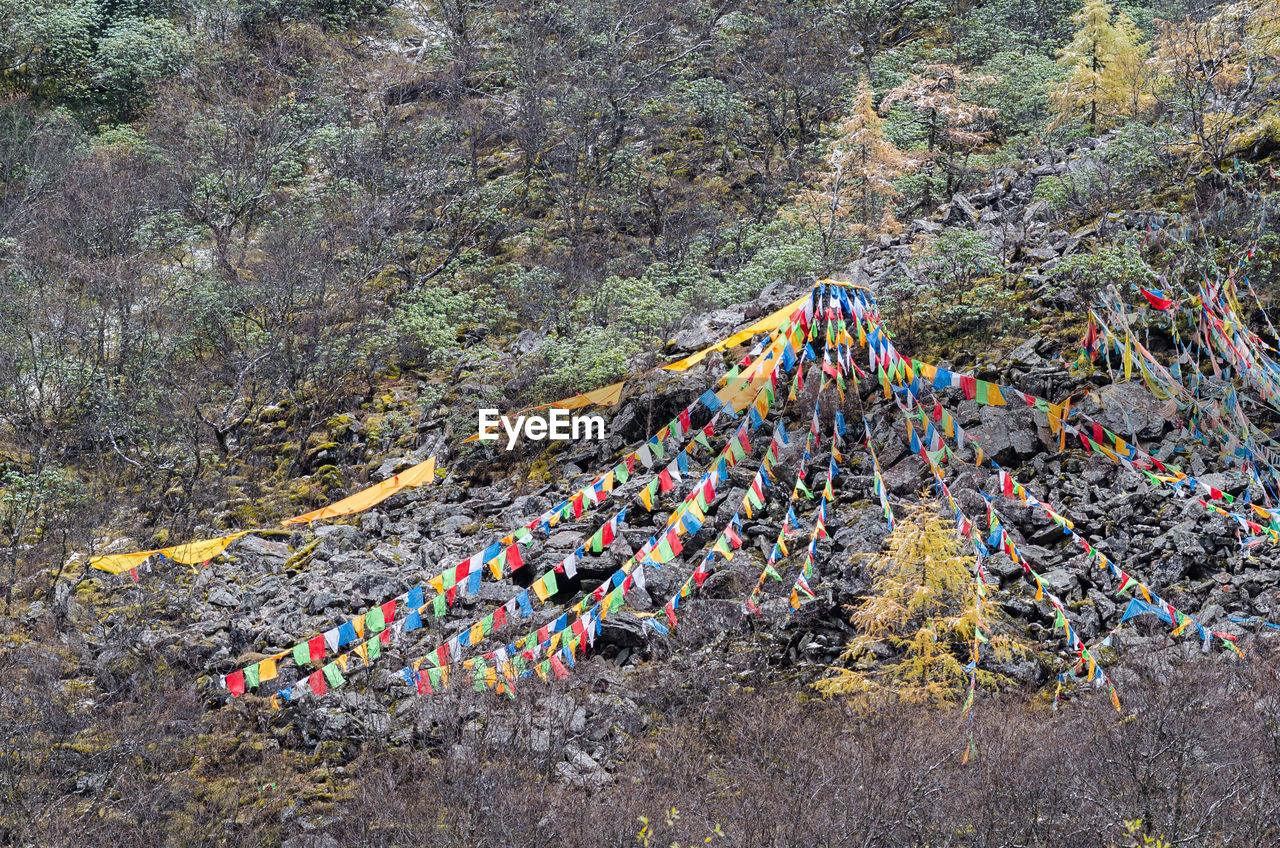 HIGH ANGLE VIEW OF PEOPLE ON MULTI COLORED TREE