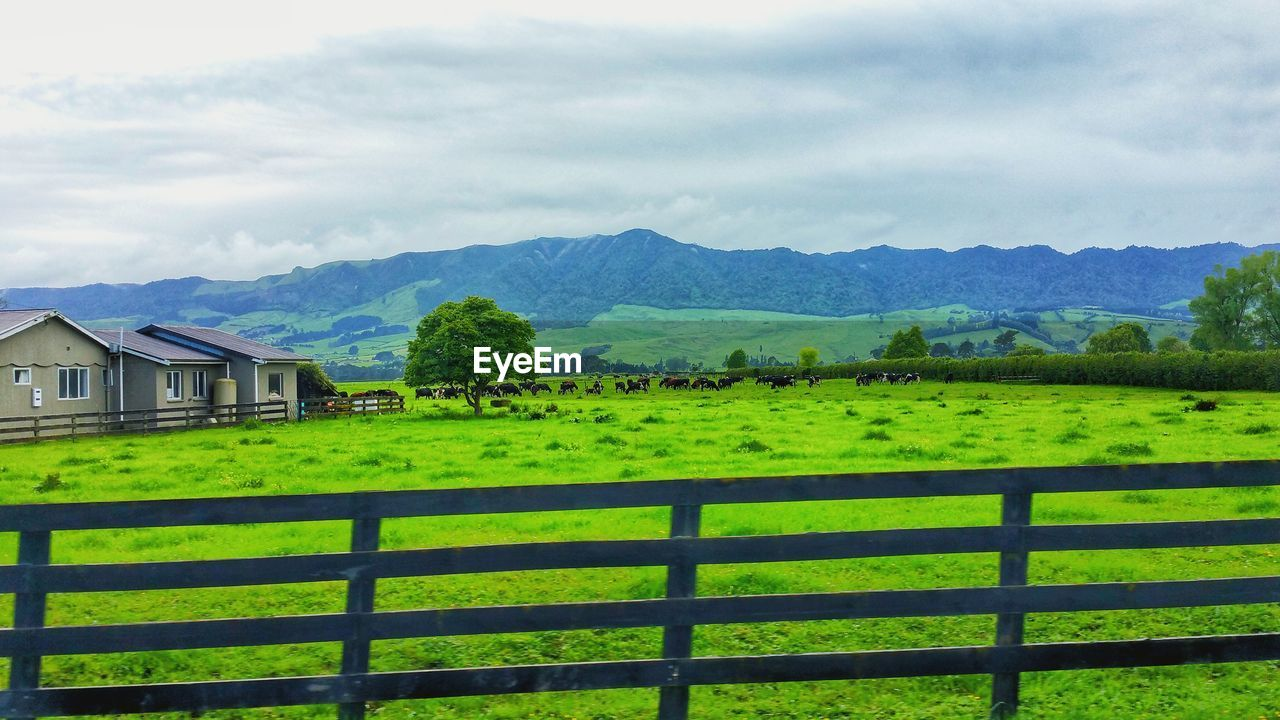 landscape, mountain, plant, field, environment, sky, land, cloud - sky, grass, green color, agriculture, nature, fence, scenics - nature, beauty in nature, rural scene, boundary, barrier, architecture, tranquil scene, farm, no people, mountain range, outdoors