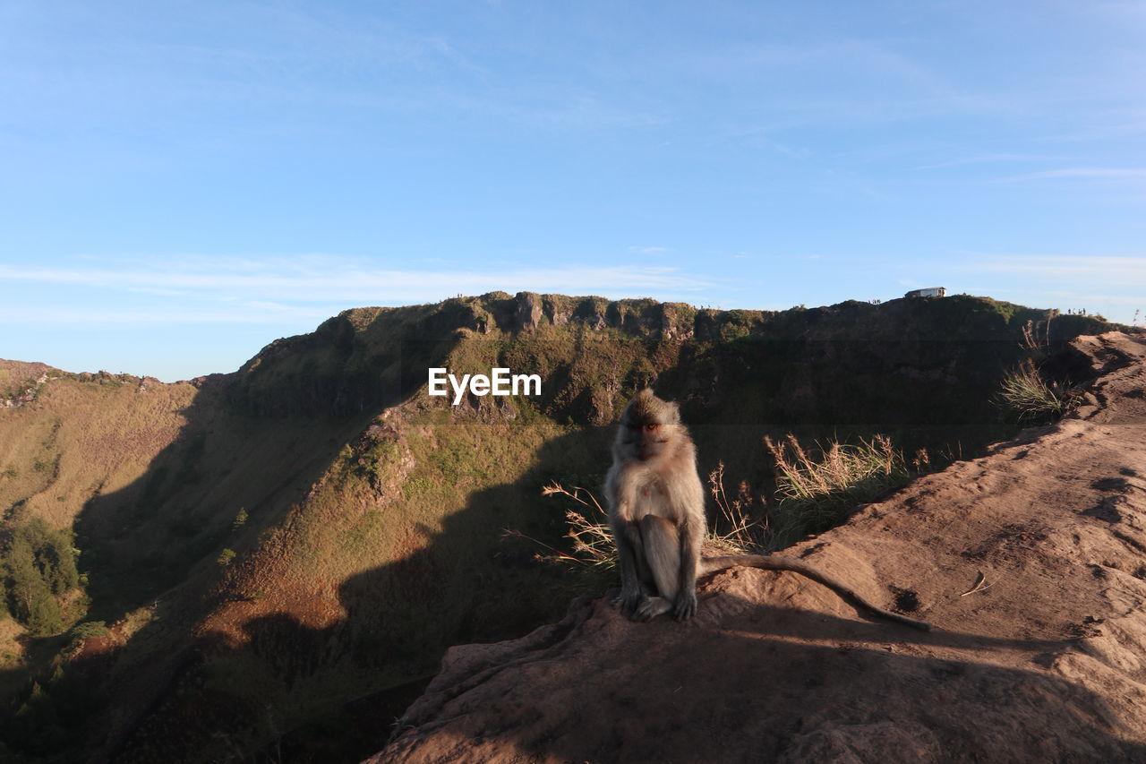 MONKEY SITTING IN A MOUNTAIN
