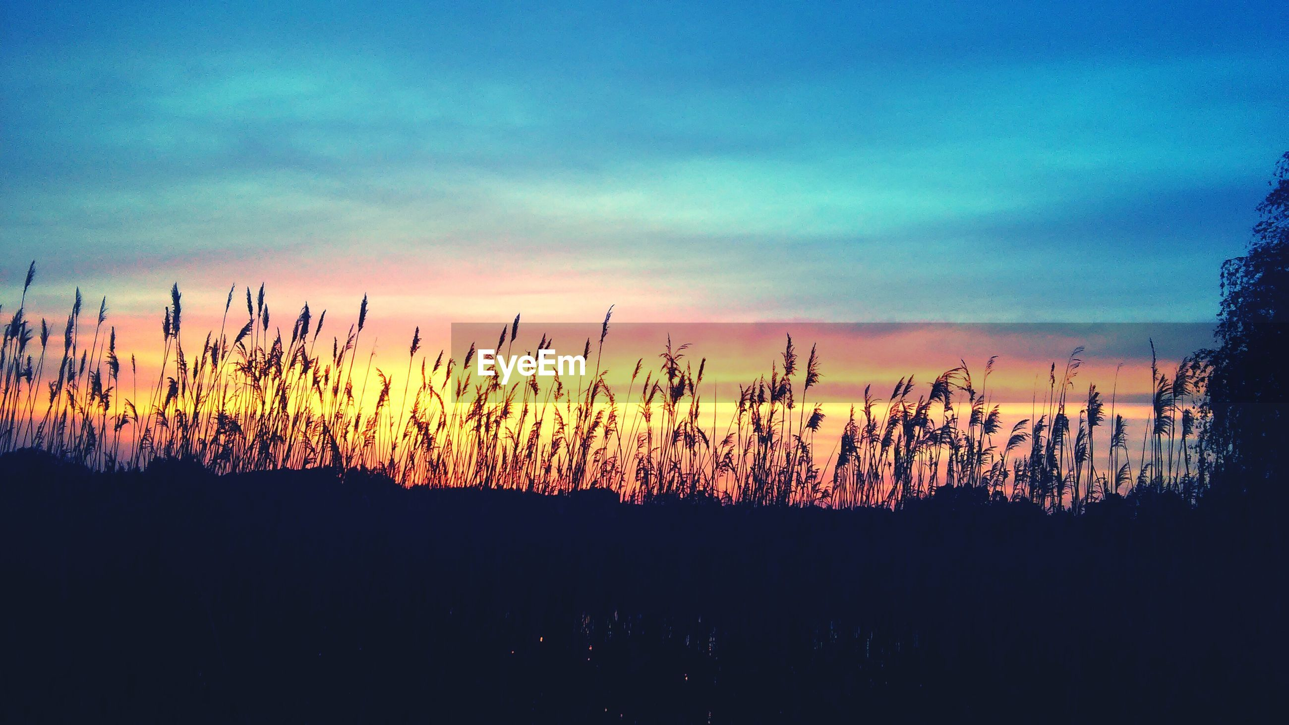 sunset, silhouette, sky, beauty in nature, tranquility, plant, growth, nature, field, tranquil scene, scenics, cloud - sky, landscape, dusk, cloud, stem, idyllic, outdoors, no people, focus on foreground