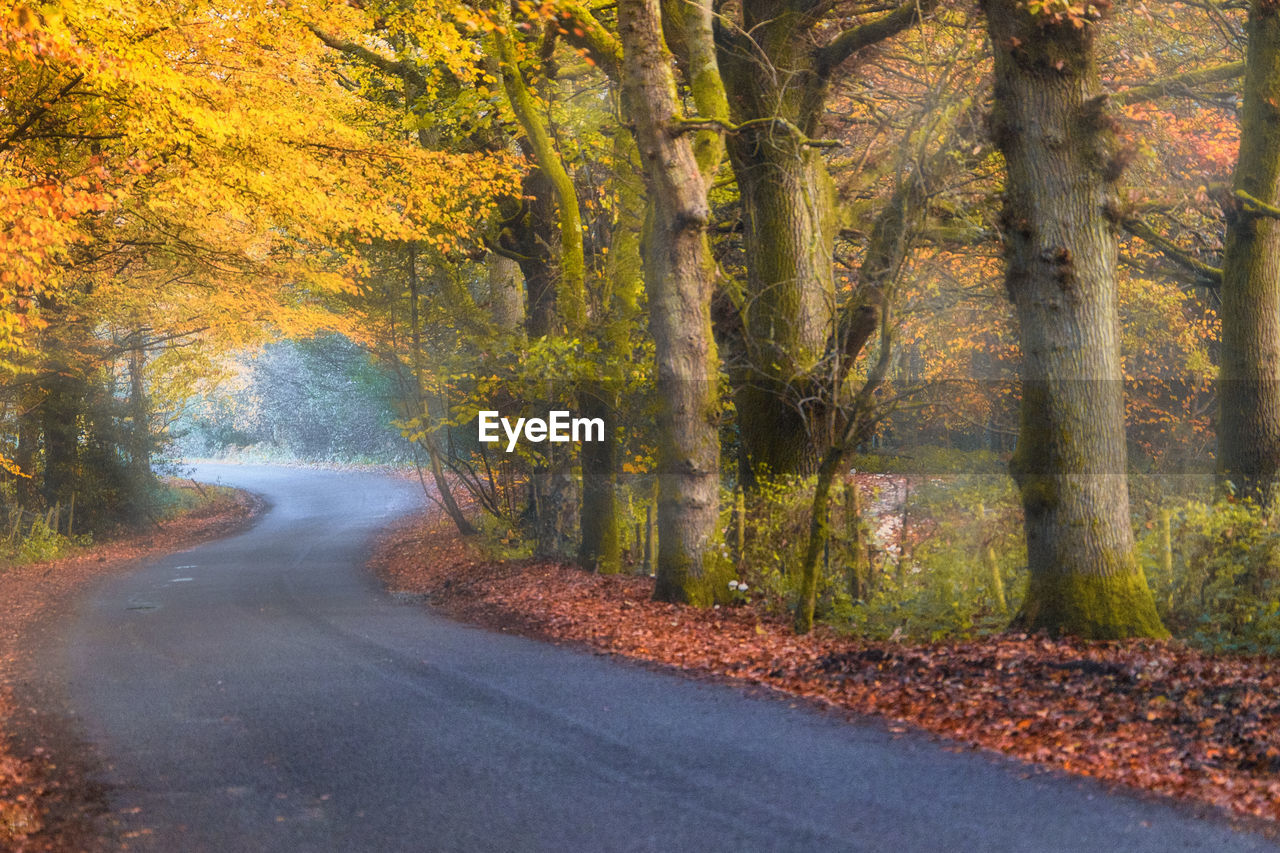 ROAD AMIDST TREES IN AUTUMN