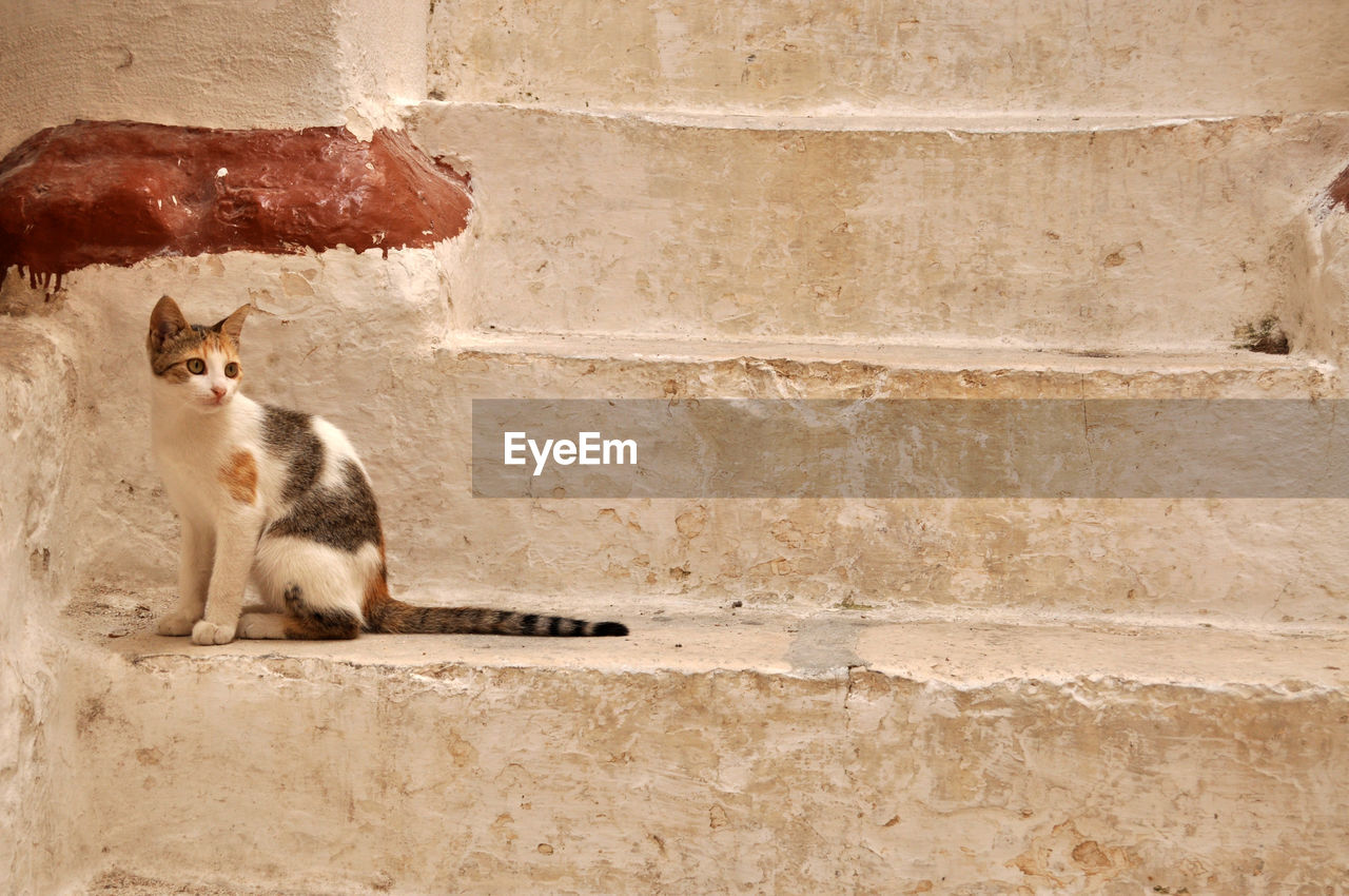 mammal, wall - building feature, one animal, domestic, no people, pets, domestic animals, vertebrate, sitting, day, cat, domestic cat, architecture, copy space, hole, wall, looking