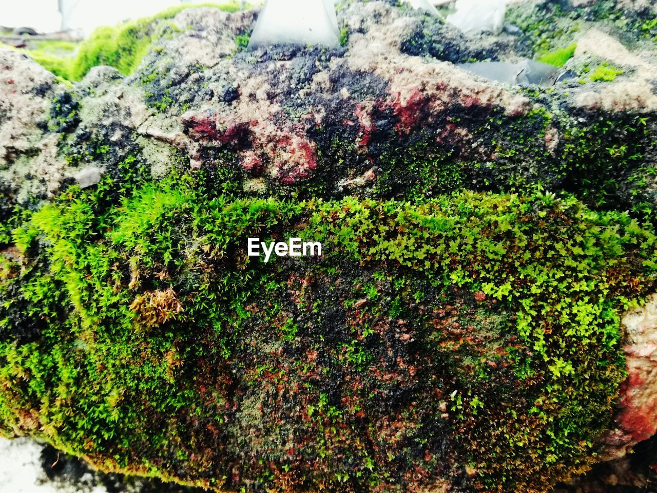 growth, moss, nature, plant, green color, day, lichen, outdoors, no people, close-up, tree, fungus, beauty in nature